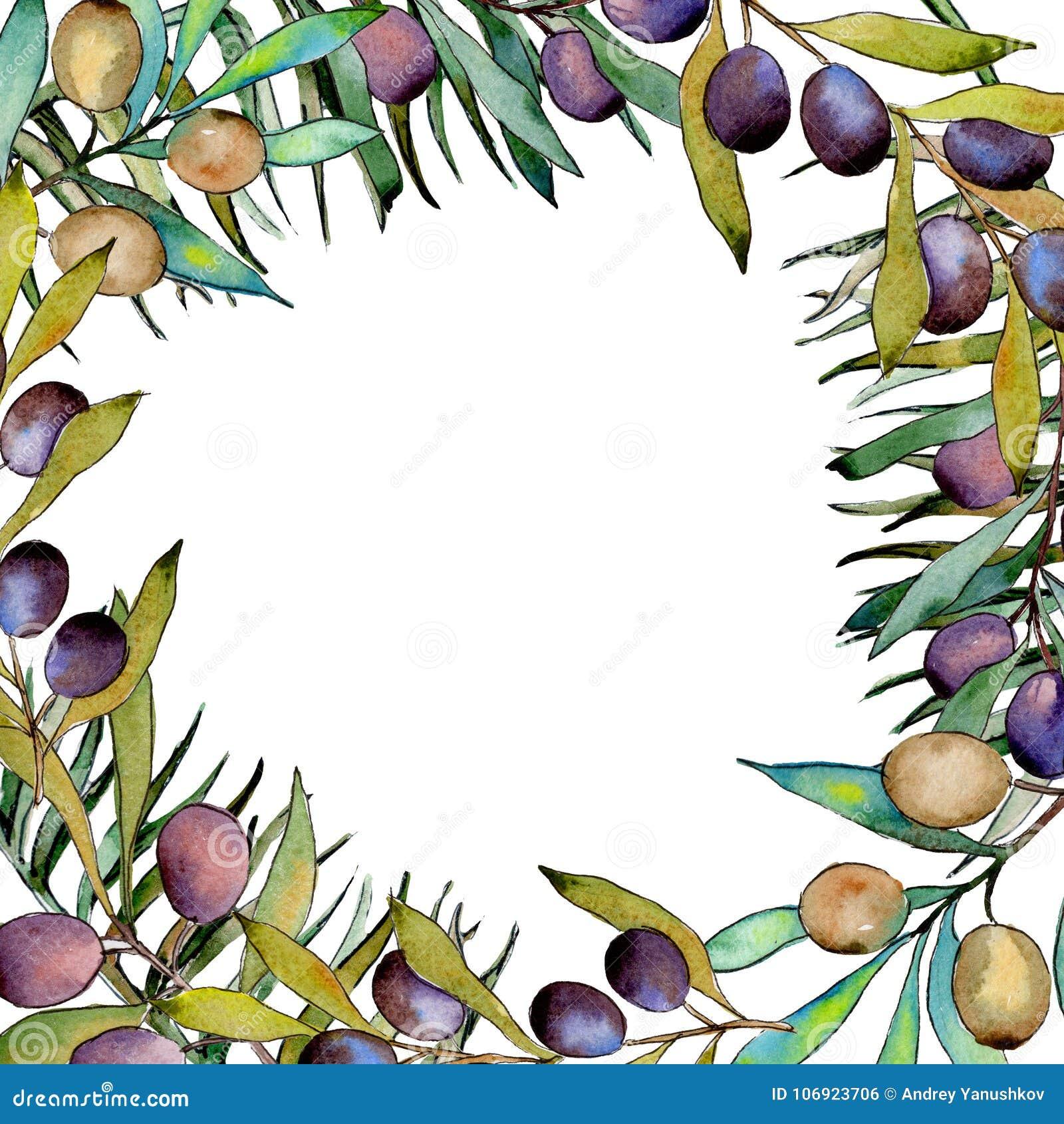 Drzewo oliwne rama w akwarela stylu