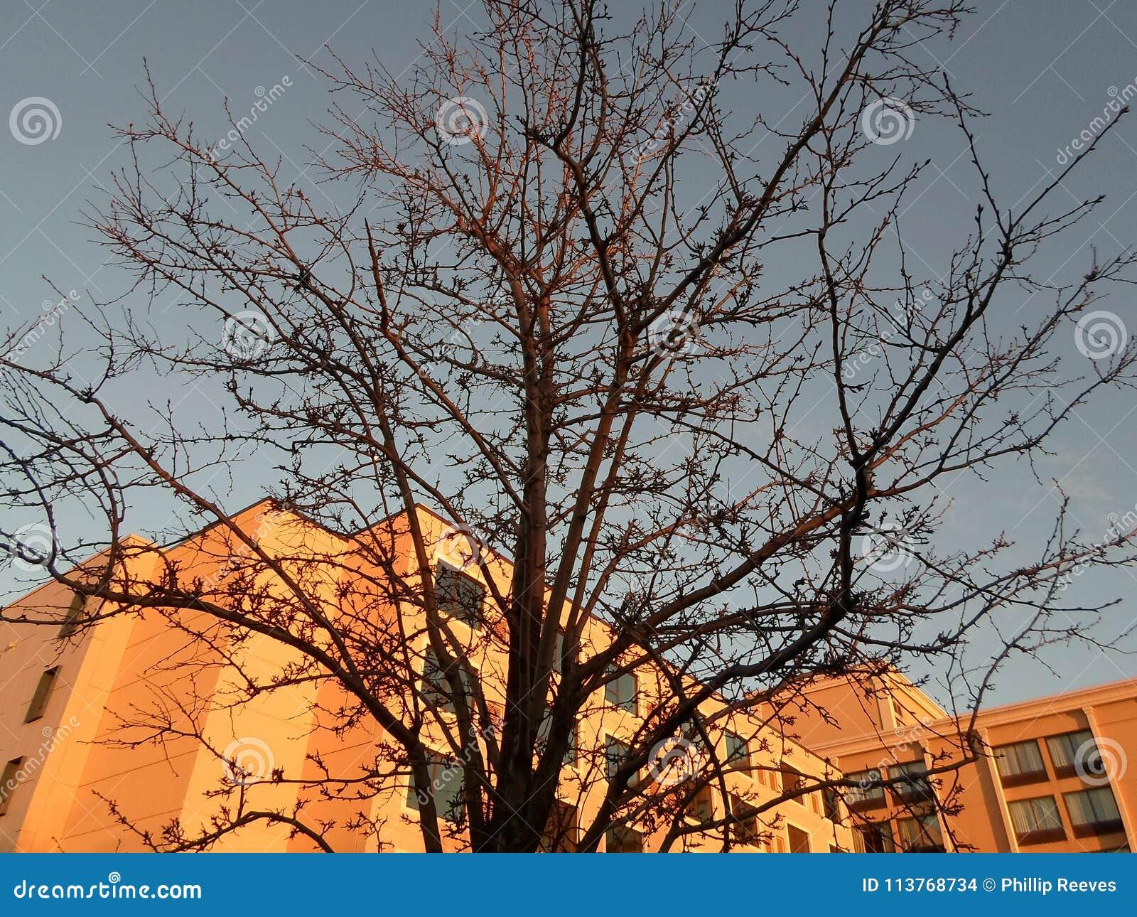 Drzewo, południe zatoki centrum, Dorchester, Massachusetts, usa