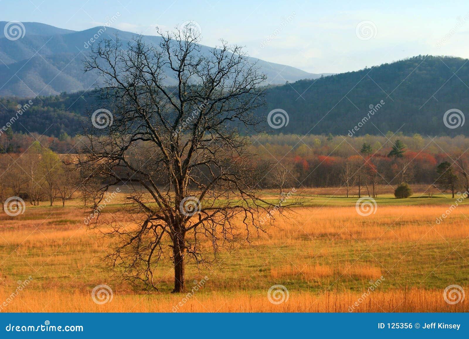 Drzewo pola