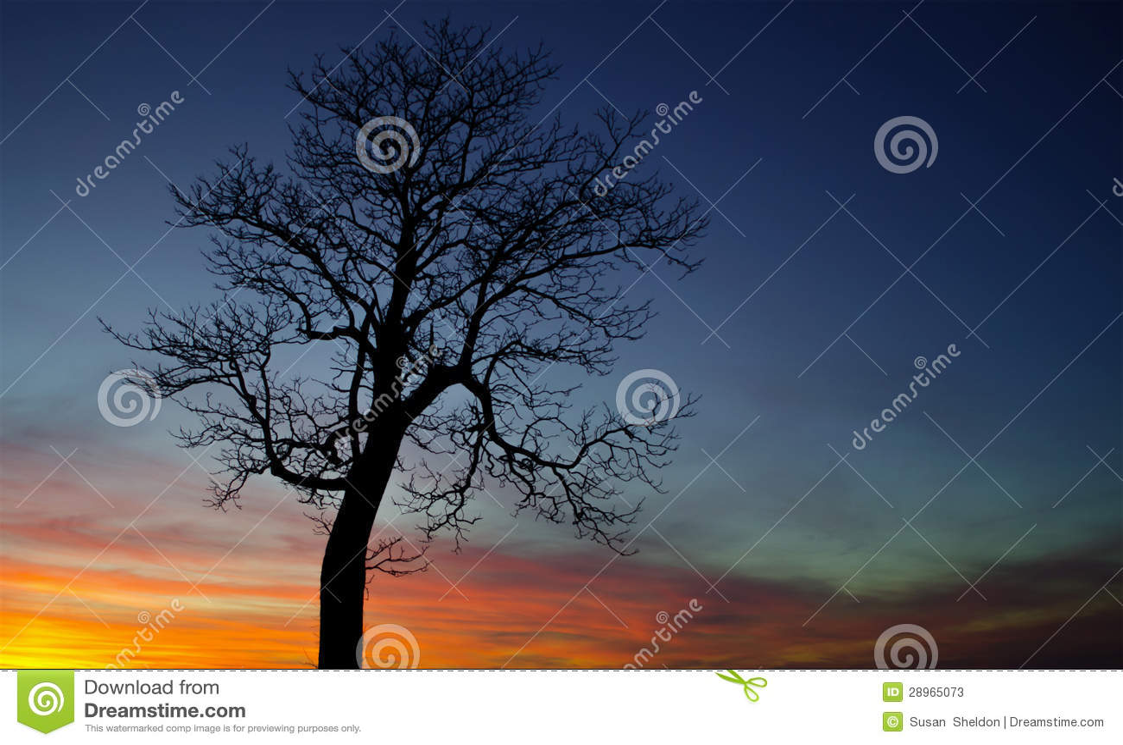 Drzewo przy dzień końcówką
