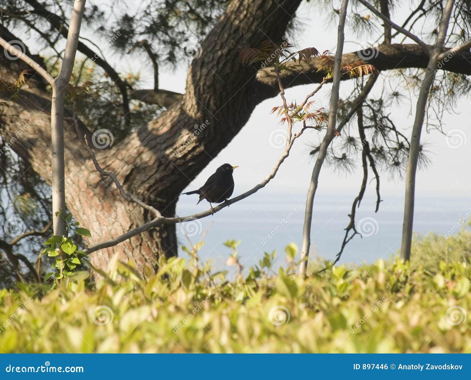 Drzewo ptaka