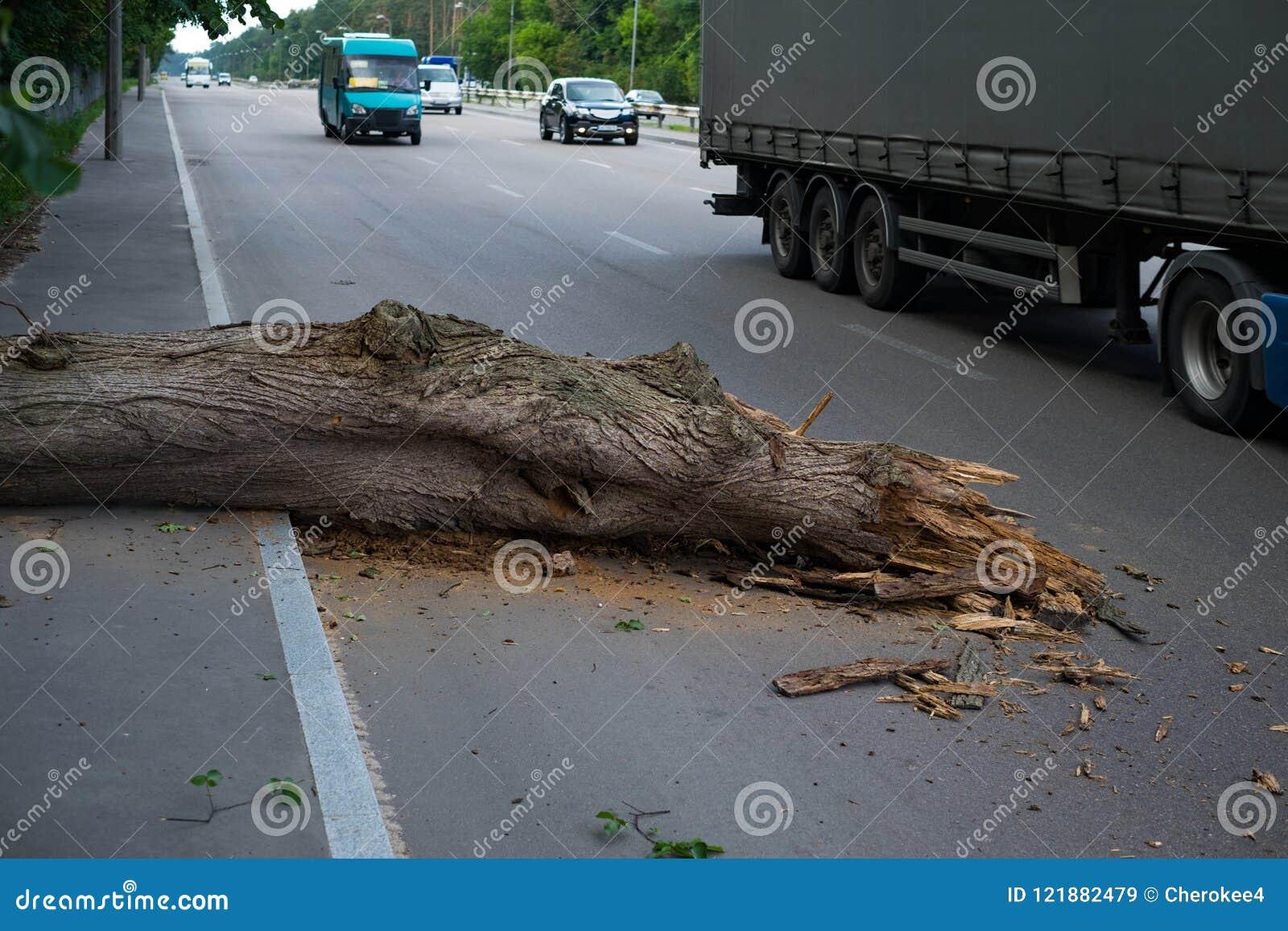 Drzewo spadał na drodze Niebezpieczeństwo ruch drogowy