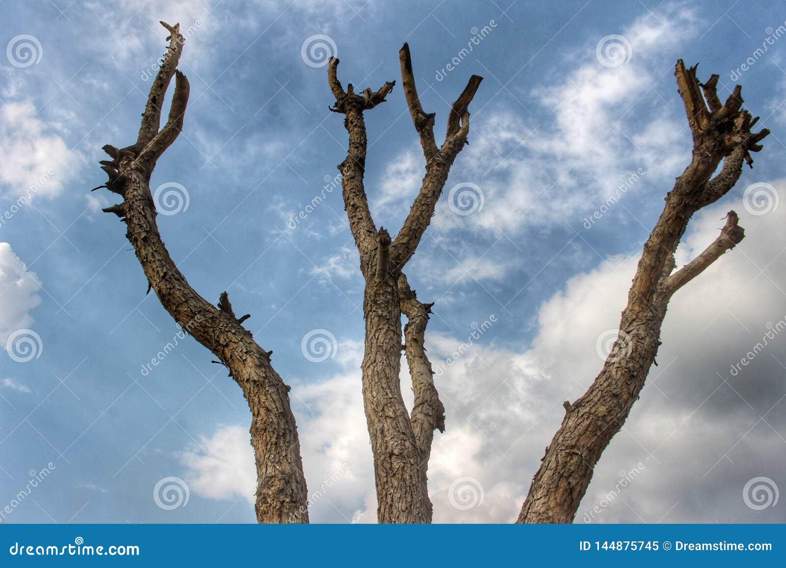 Drzewo stojak