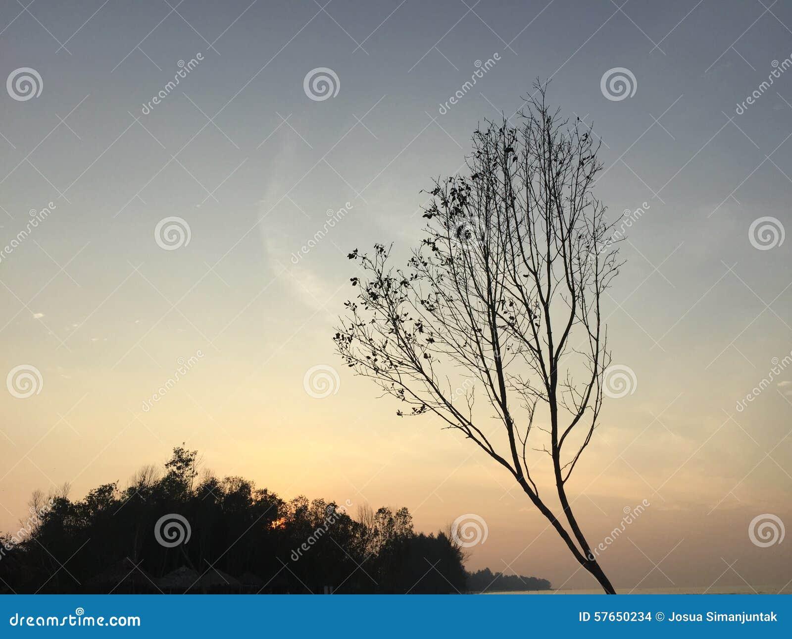 Drzewo w błękitnej fala