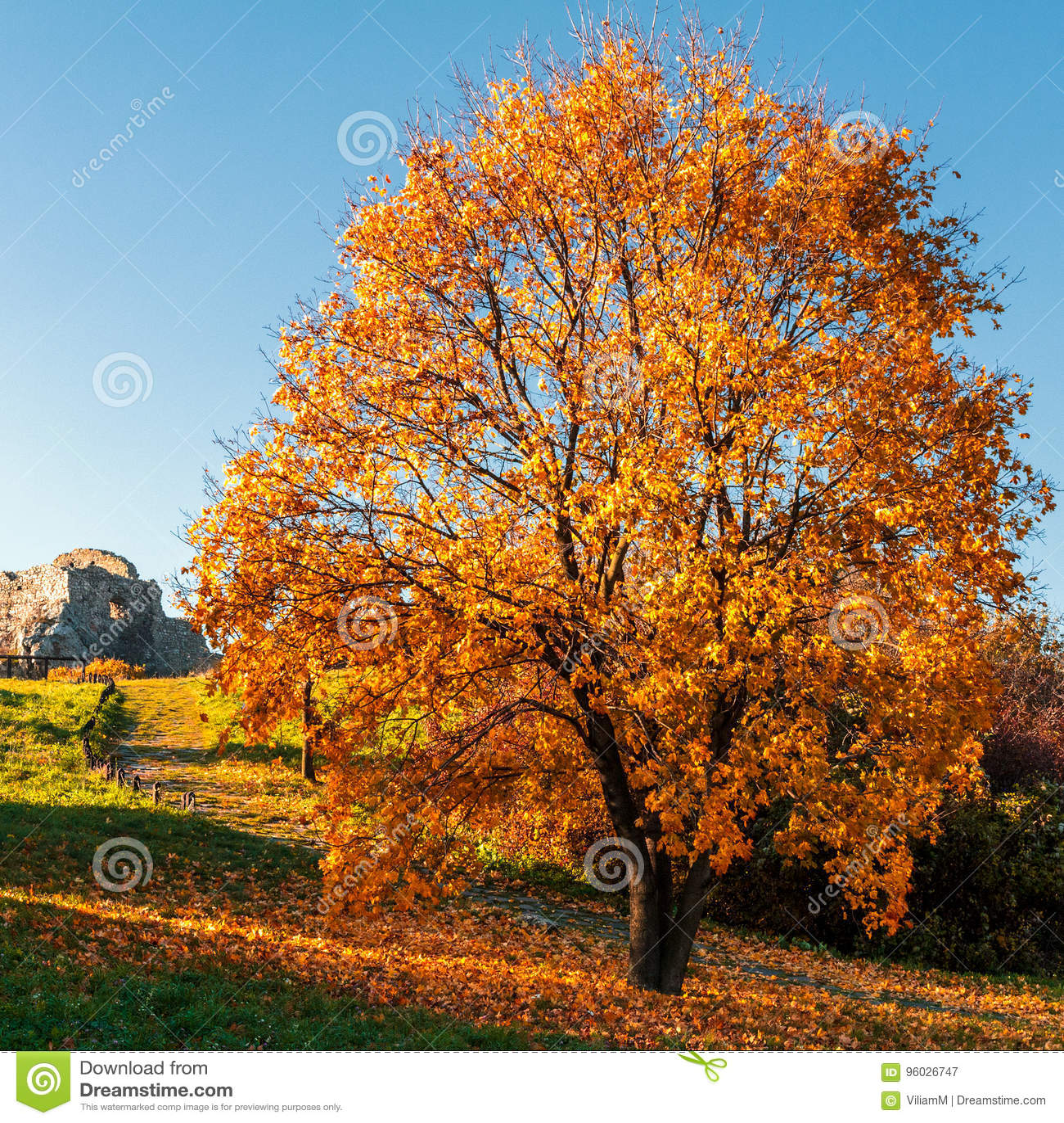 Drzewo w jesieni świetle słonecznym