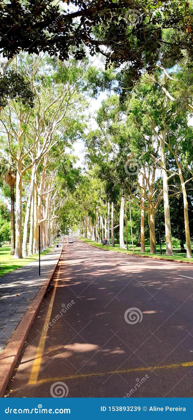 Drzewo w królewiątko parku - sposób
