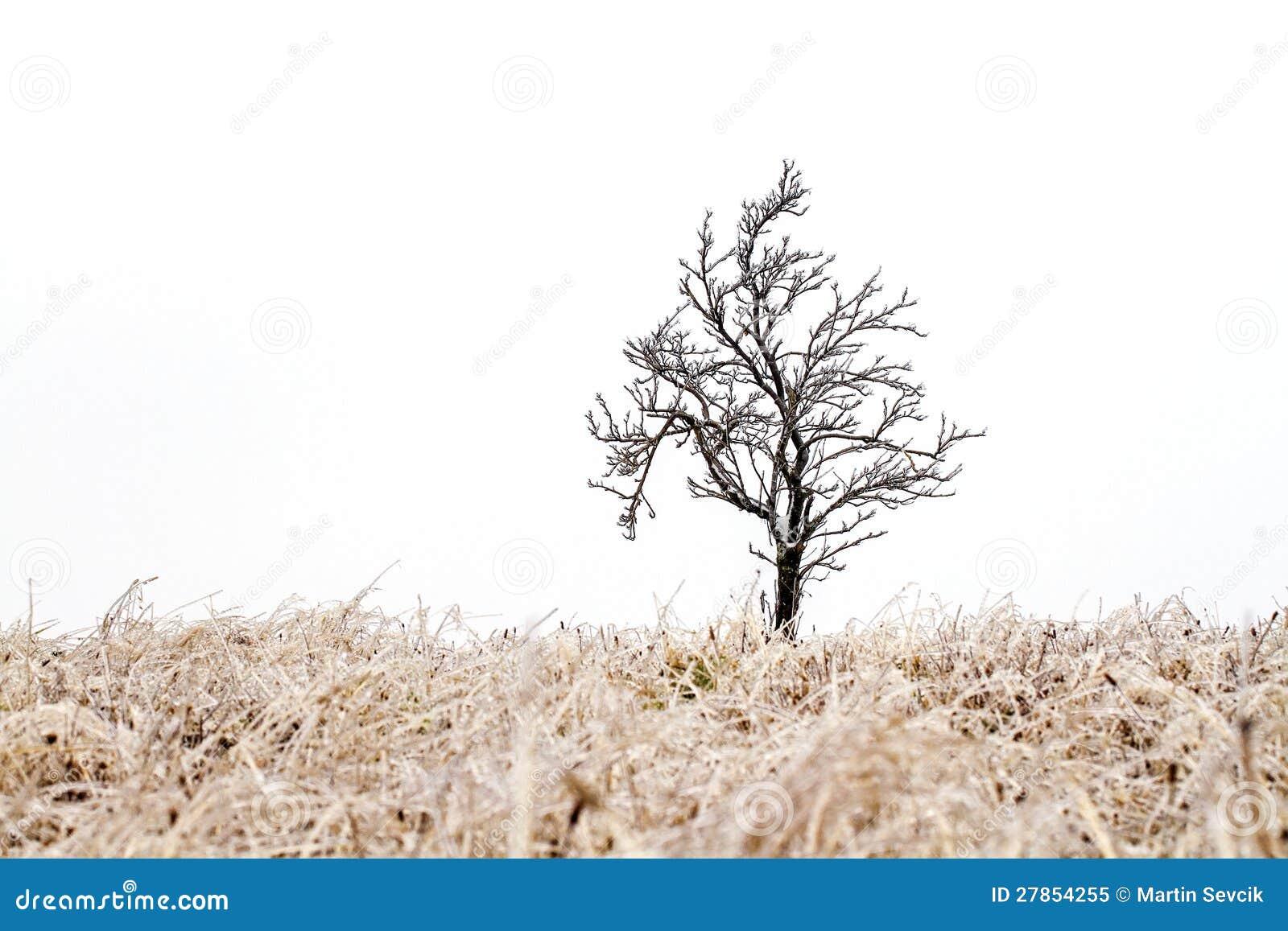 Drzewo w lodowatym uścisku