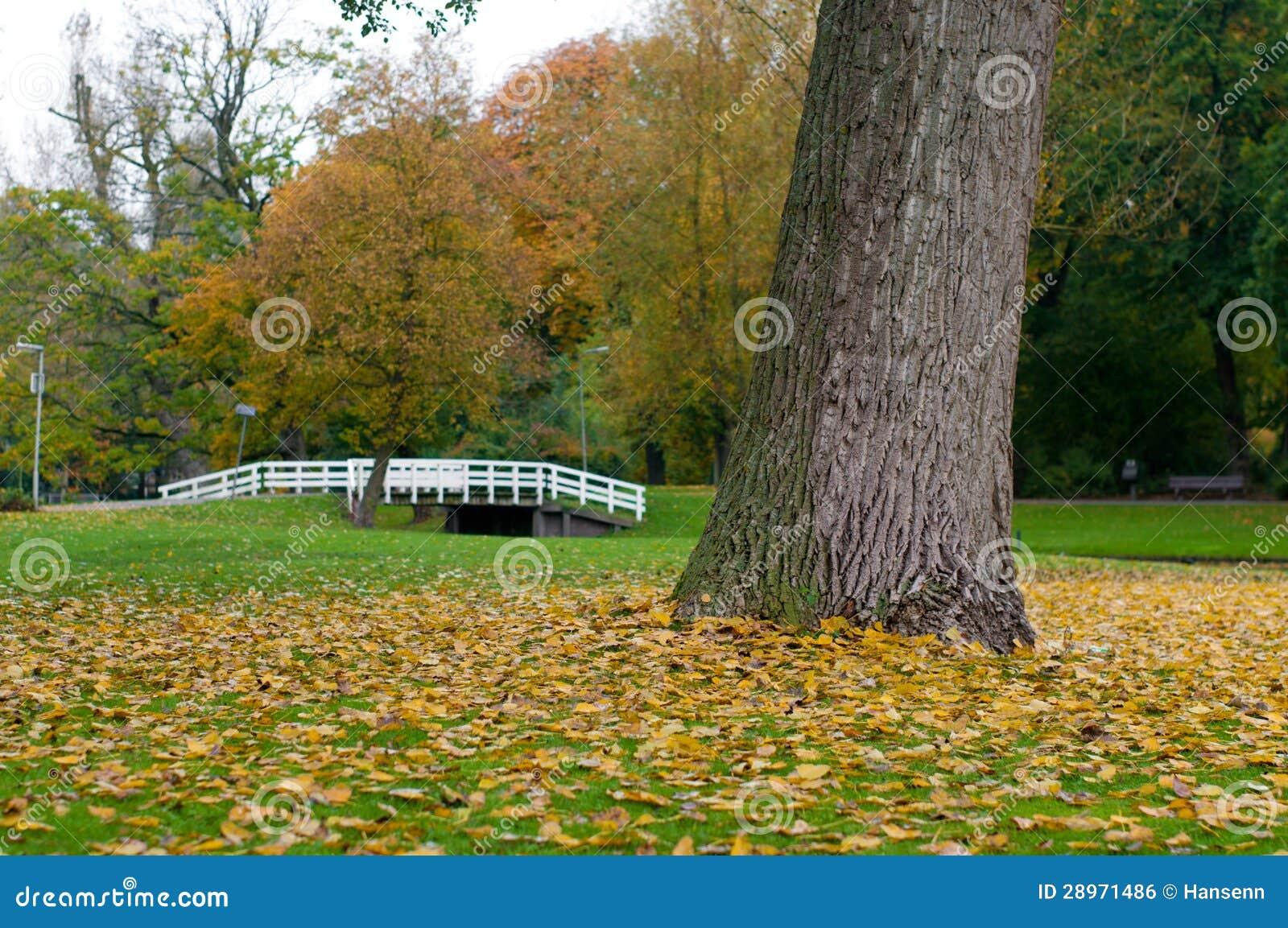 Drzewo w parku