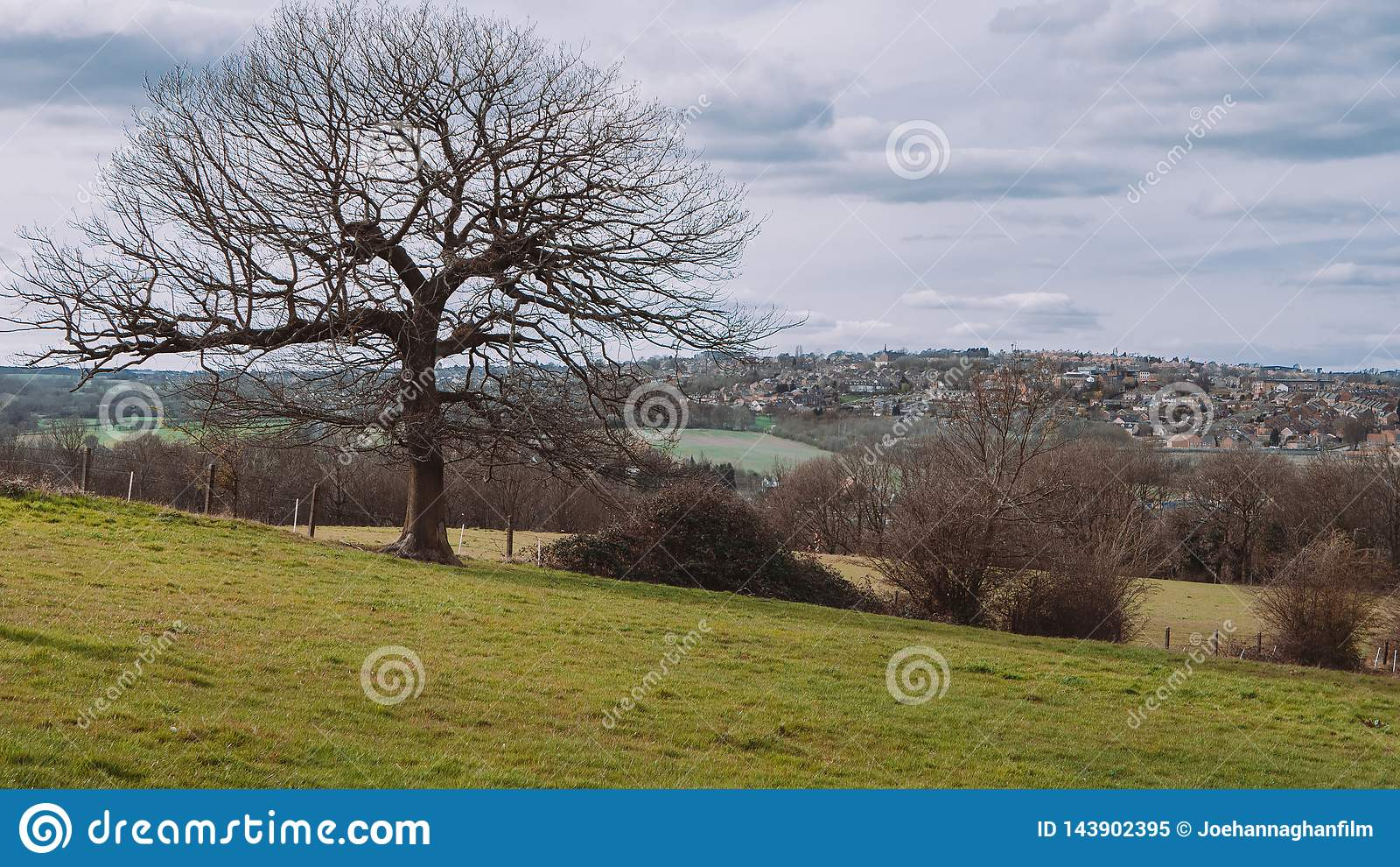 Drzewo w Yorkshire wsi krajobrazie