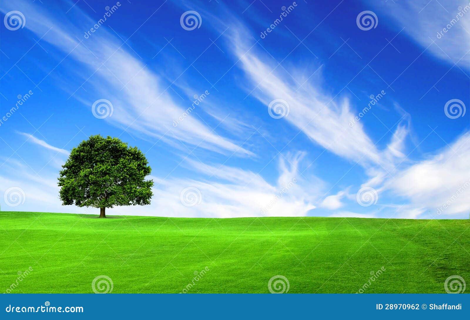 Drzewo w zielonym polu
