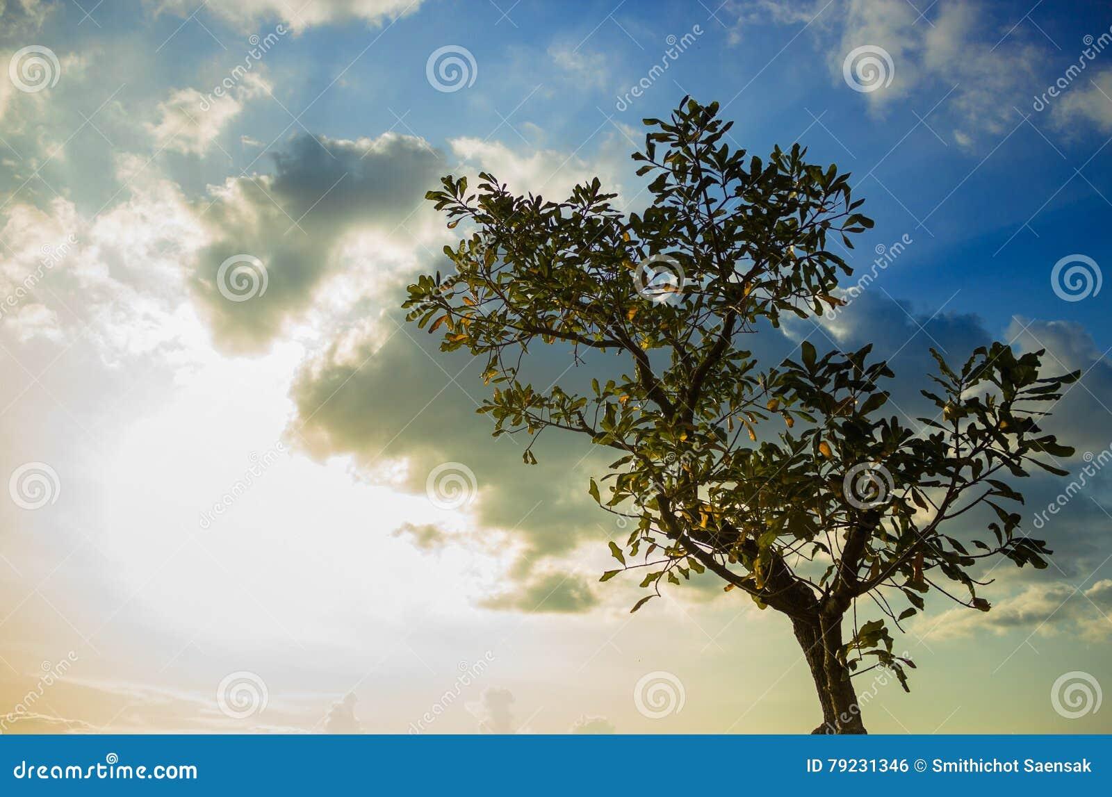 Drzewo w zmierzchu