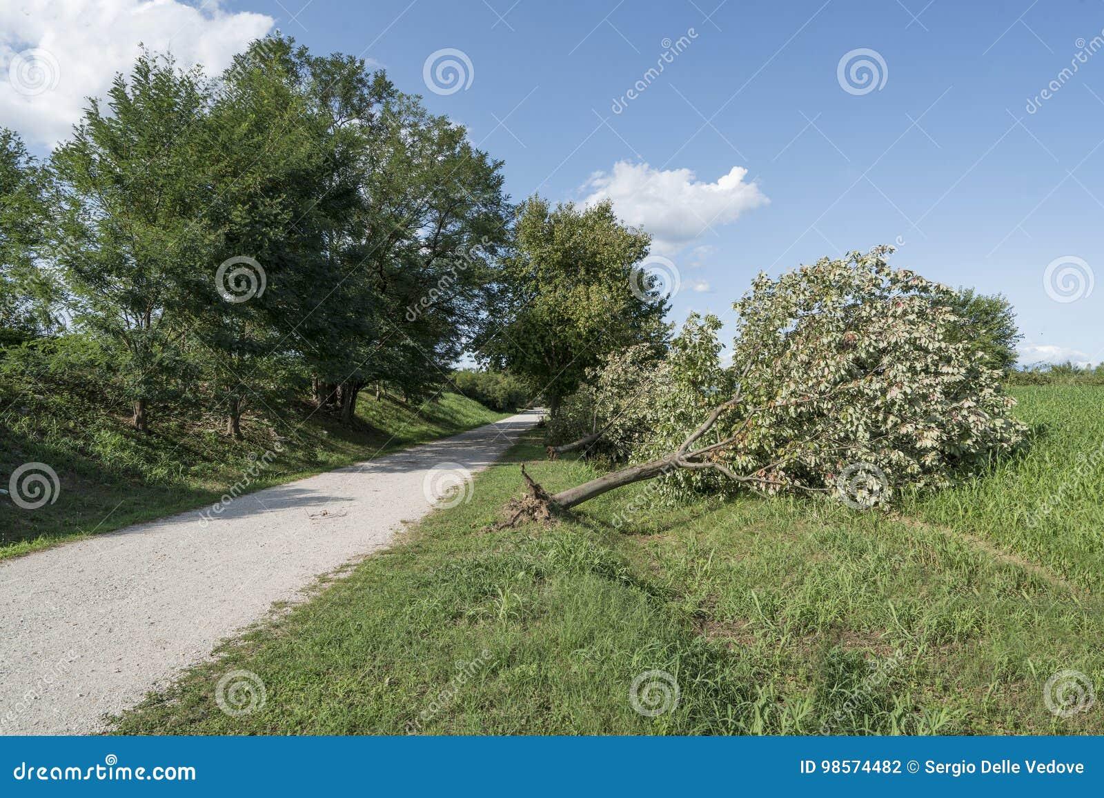 Drzewo wykorzeniający