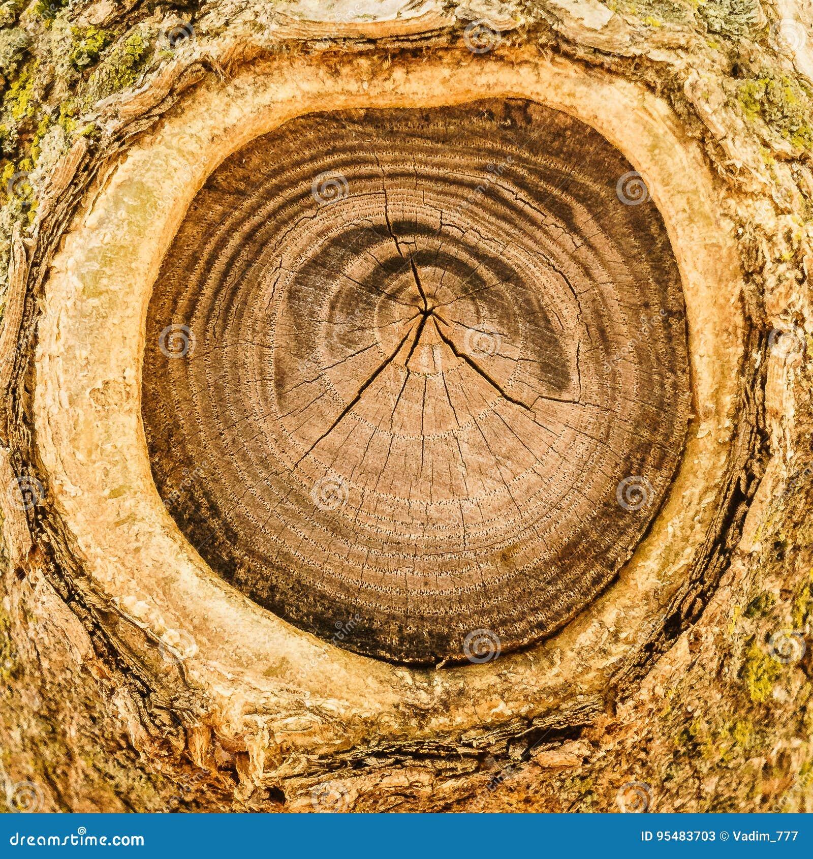 Drzewo z cutted z gałąź