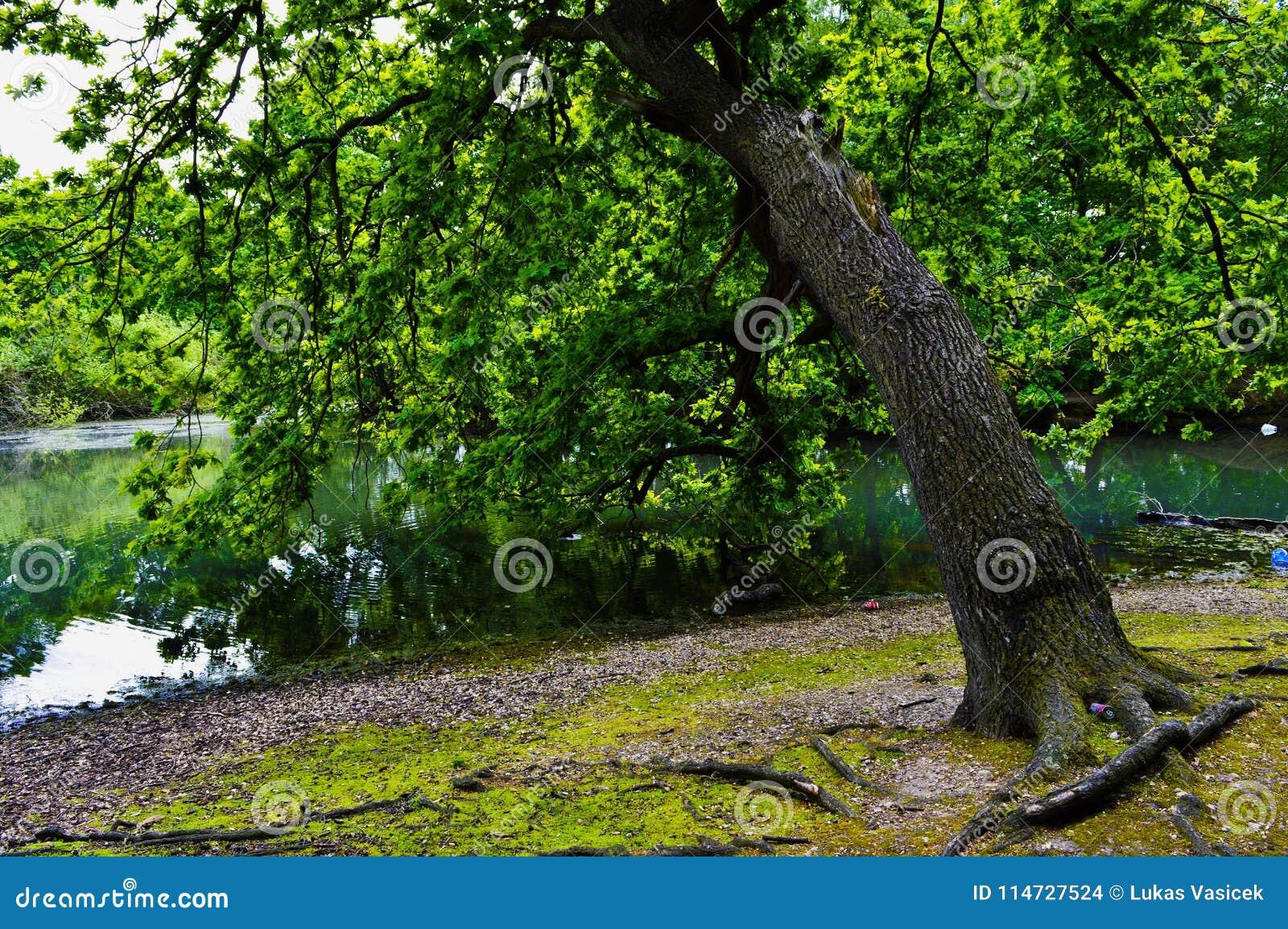 Drzewo z jeziorem - London