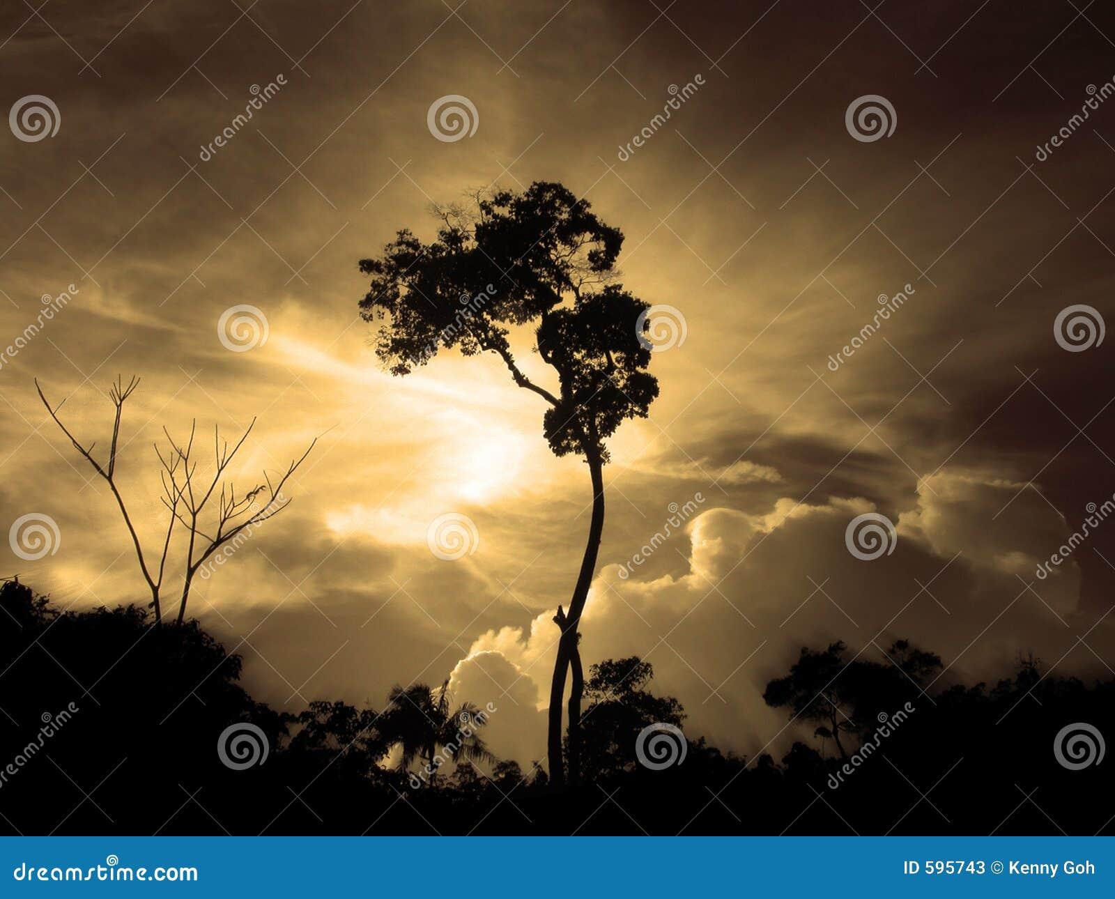 Drzewo zmierzchu