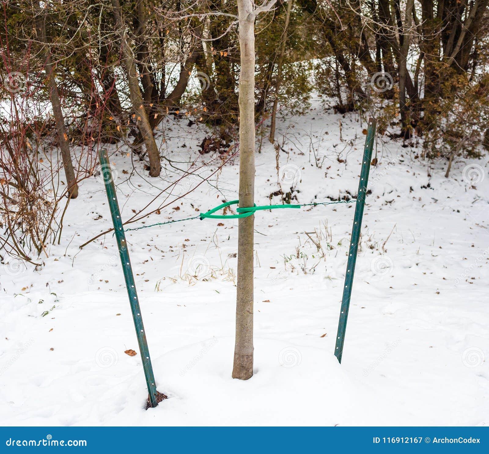 Drzewo związujący metali kablami i stosami