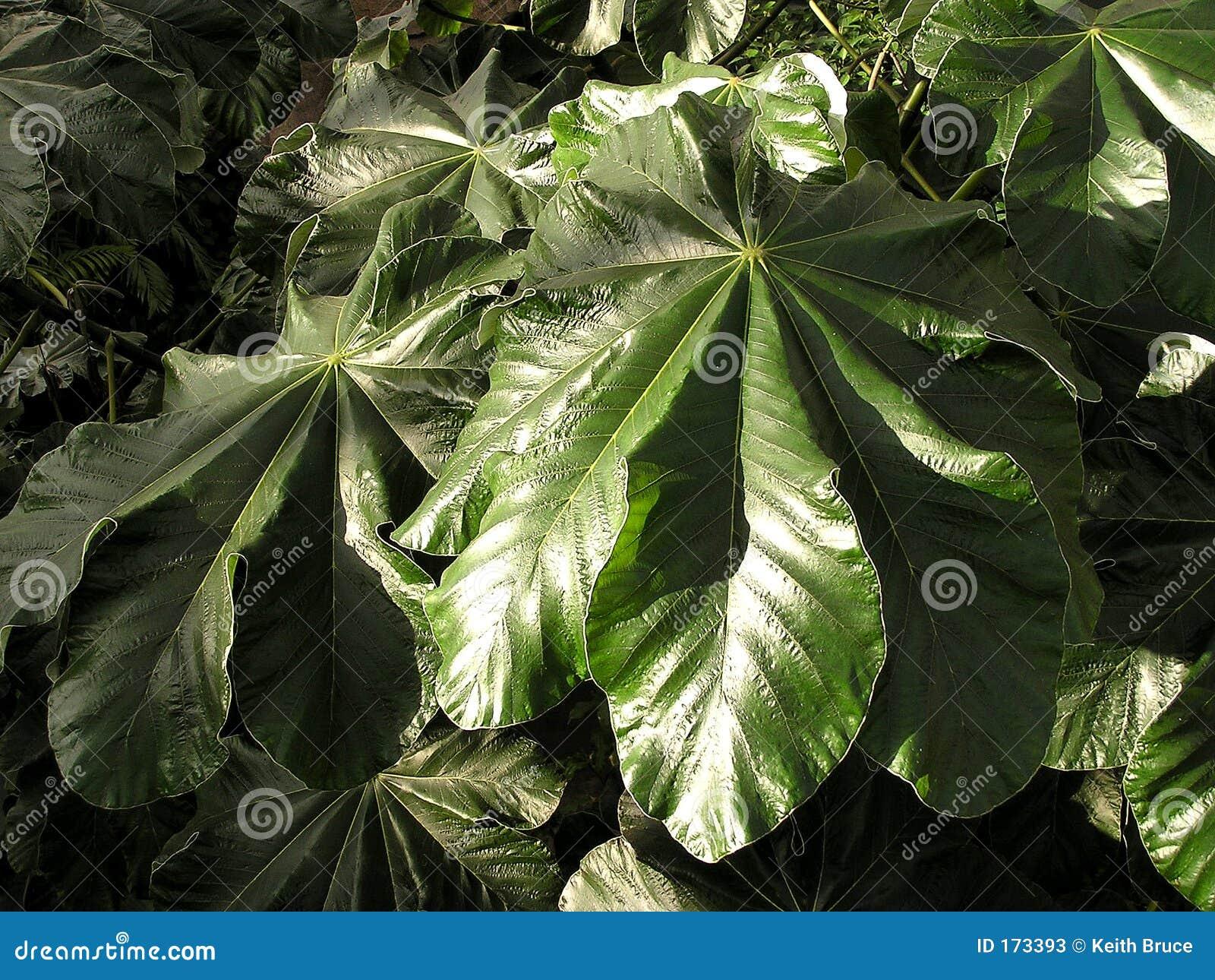 Dschungel-Blatt-Beschaffenheit 2