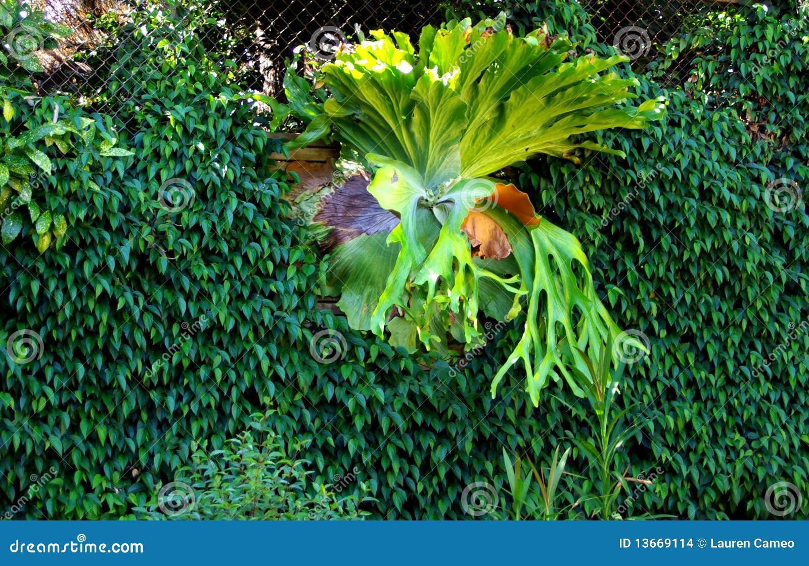 DschungelTeppich Wand U Staghorn Stockbilder  Bil