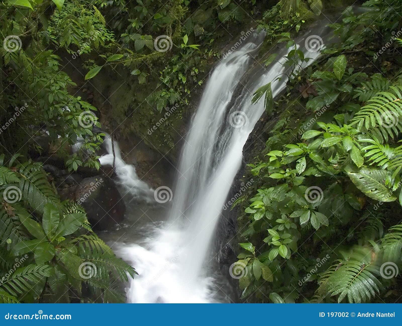 Dschungelwasserfall