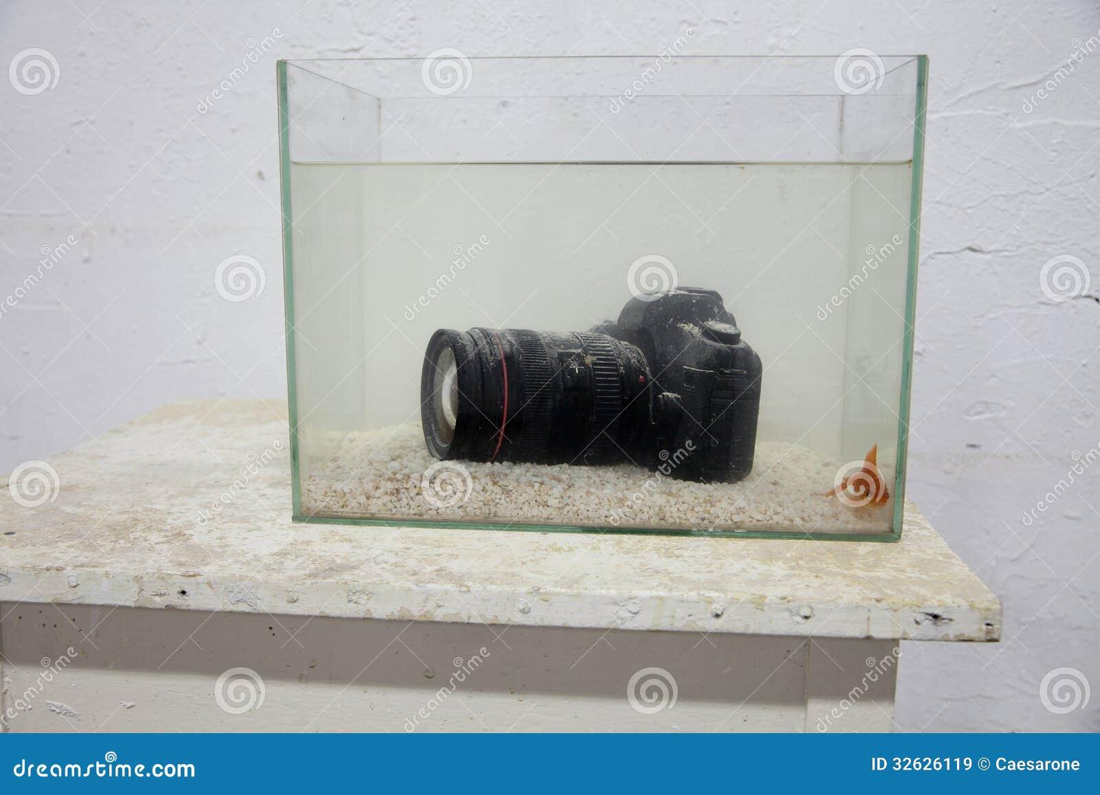 Dslr digital camera submerged in an aquarium royalty free for Fish tank camera