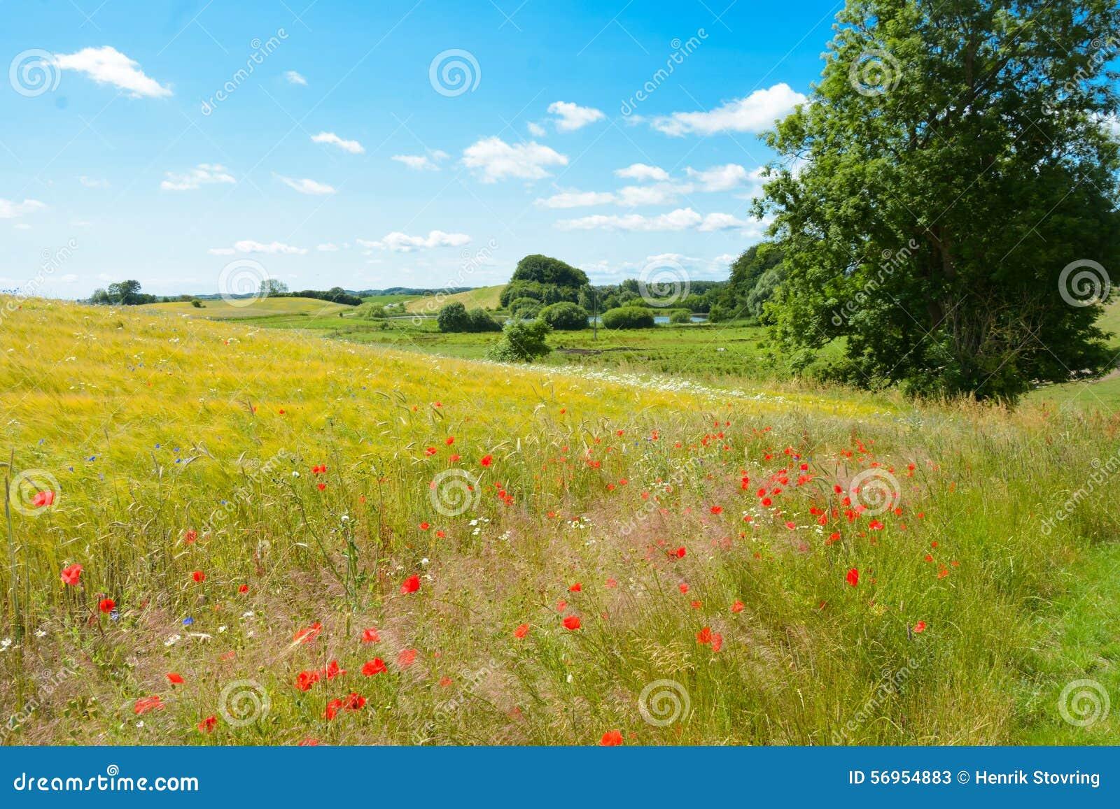 Duński lato krajobraz