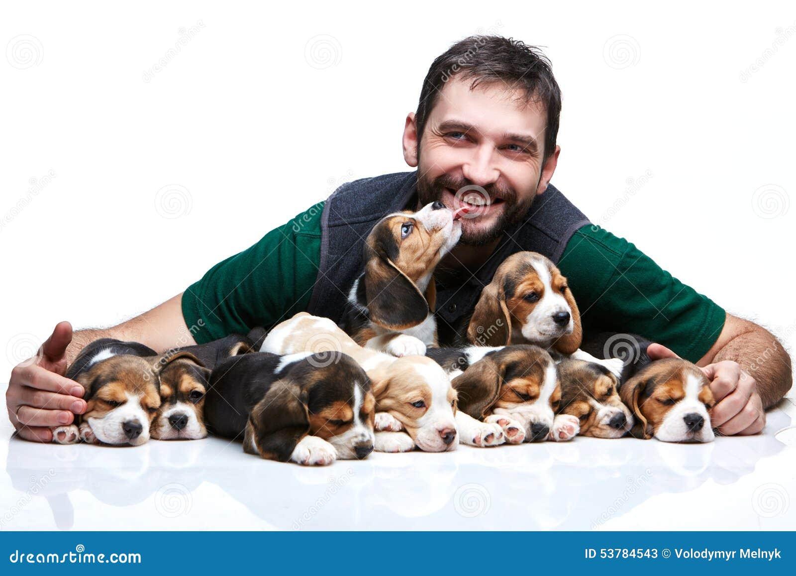 Duża grupa beagle szczeniaki i mężczyzna