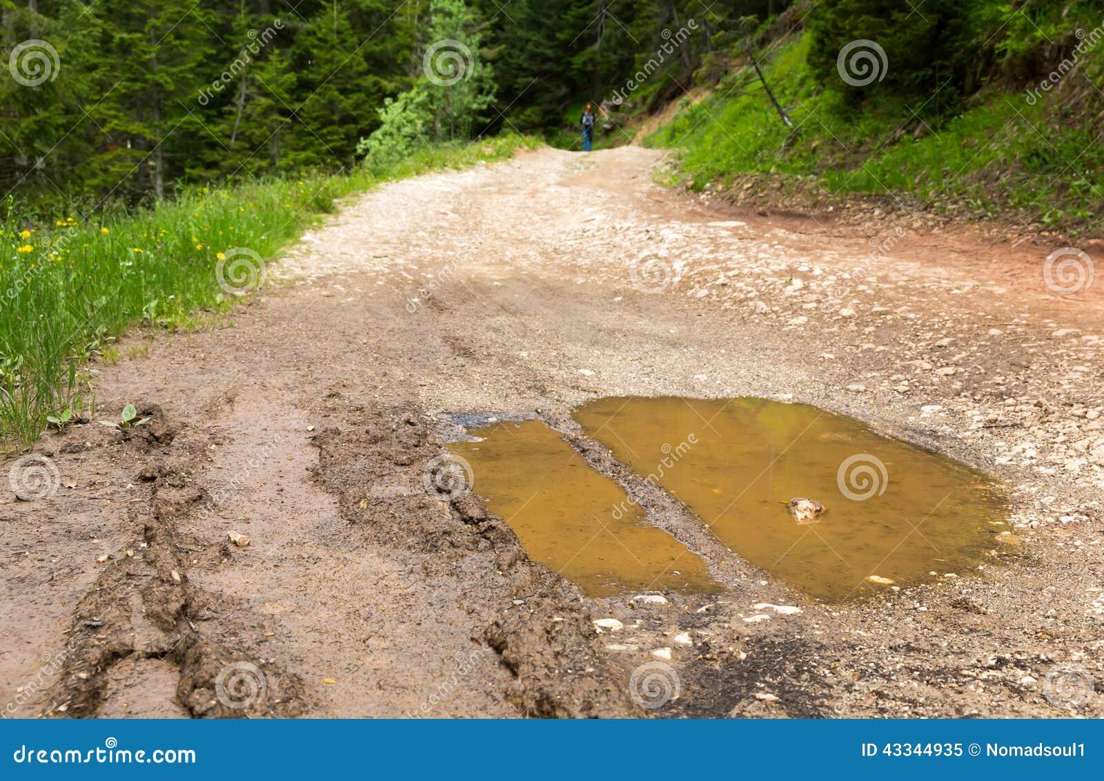 Duża kałuża na bekowisko drodze po deszczu w lesie