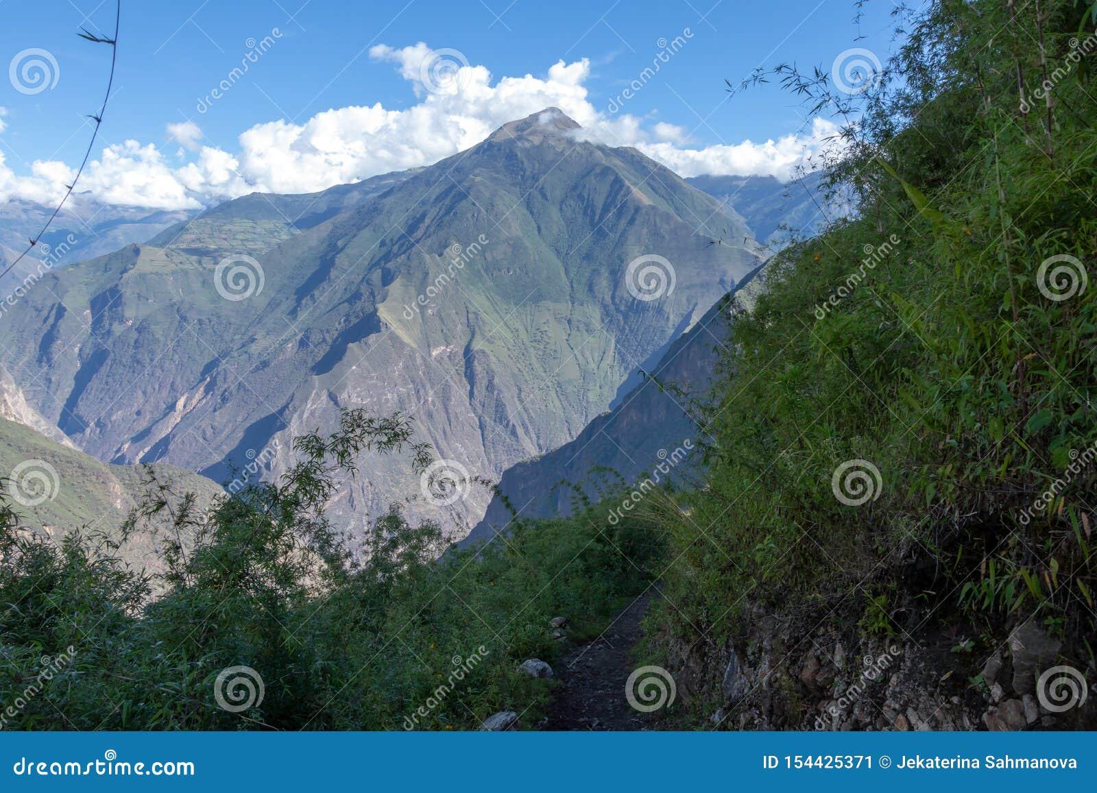 Dużej wysokości dżungli luksusowa flora w zielonej Rio Bianco dolinie po Choquequirao przepustki, Andes, Peru