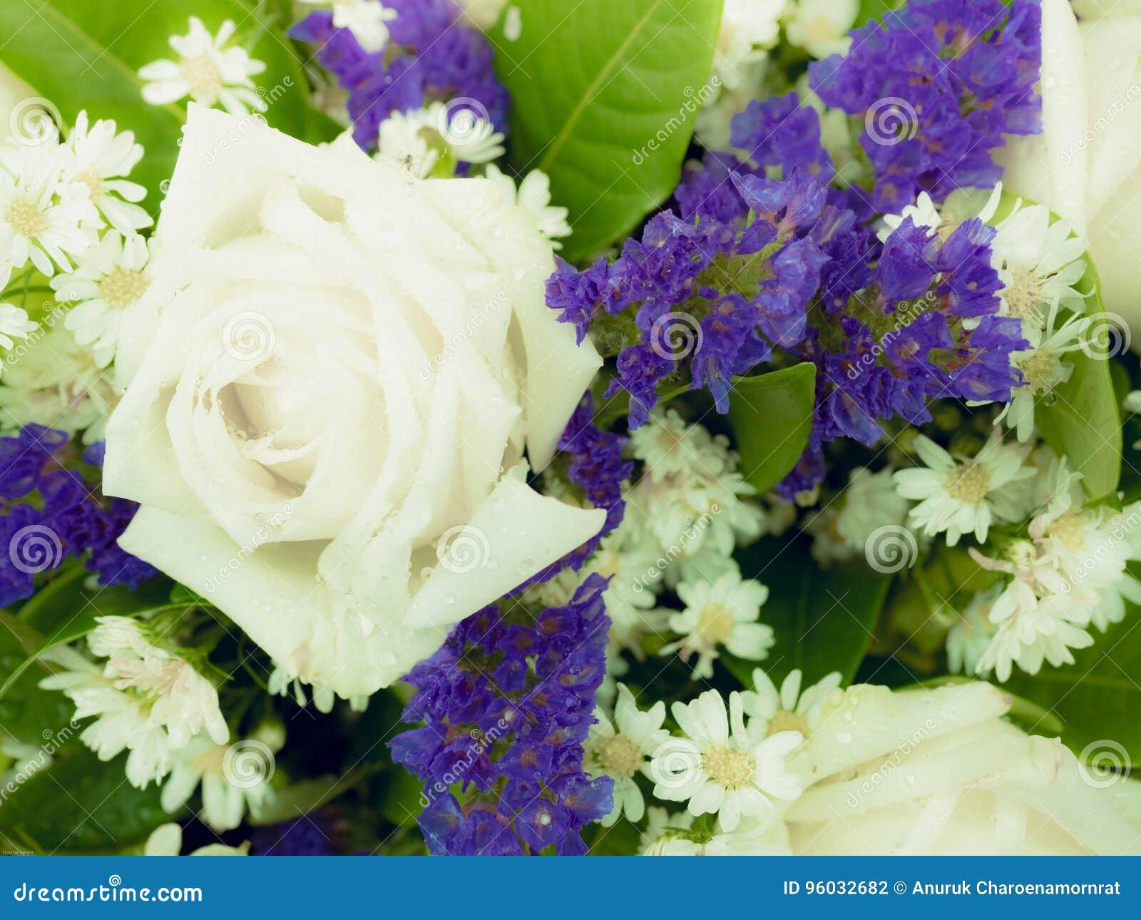 Duży biel róży kwiat z błękitnym kwiatu tłem małym x28 &; miękka część fo