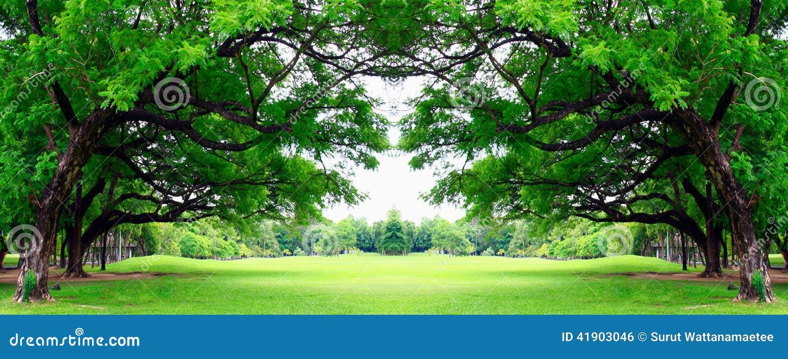 Duży drzewo