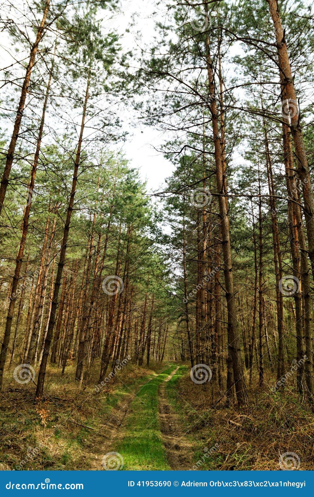 Duży las