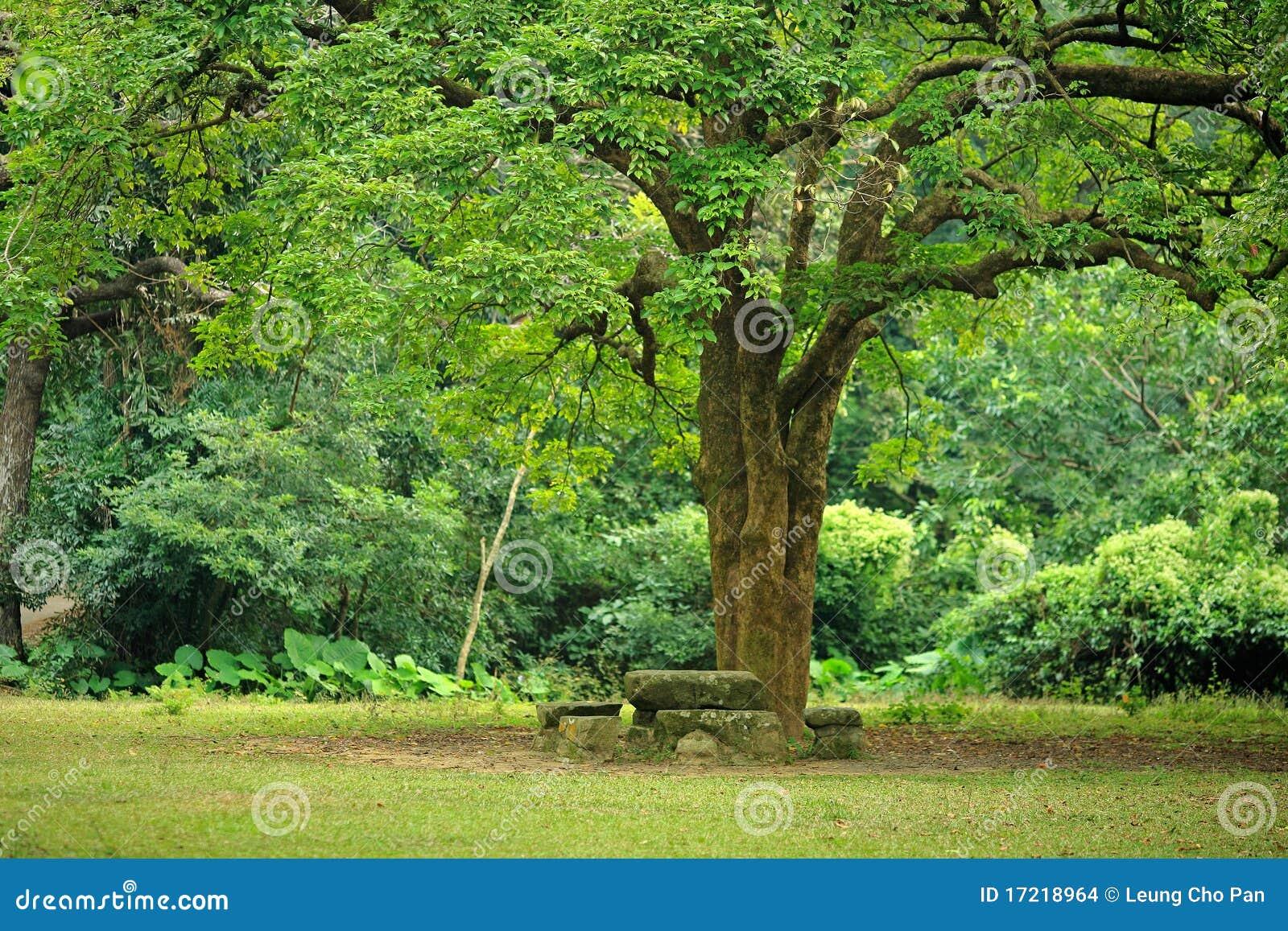 Duży miejsca odpoczynku drzewo