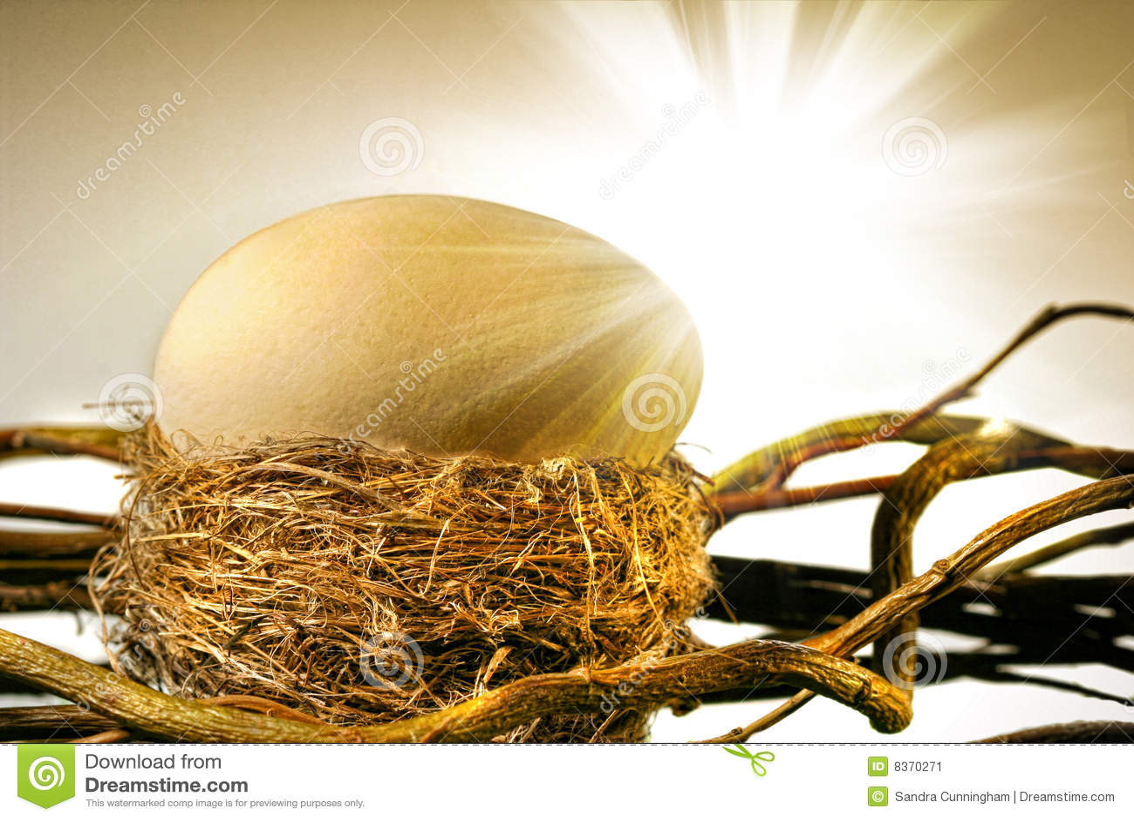 Duży ptasi jajka gniazdeczko s