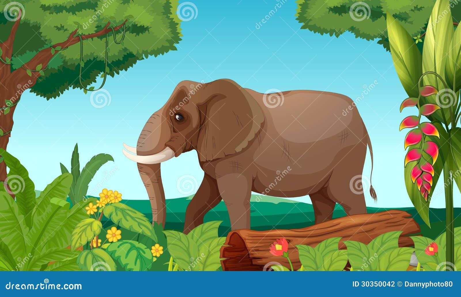 Duży słoń w dżungli