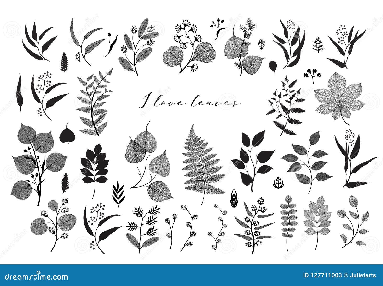 Duży set gałąź i liście, spadek, wiosna, lato Rocznik wektorowa botaniczna ilustracja, kwieciści elementy w czarnym projekcie