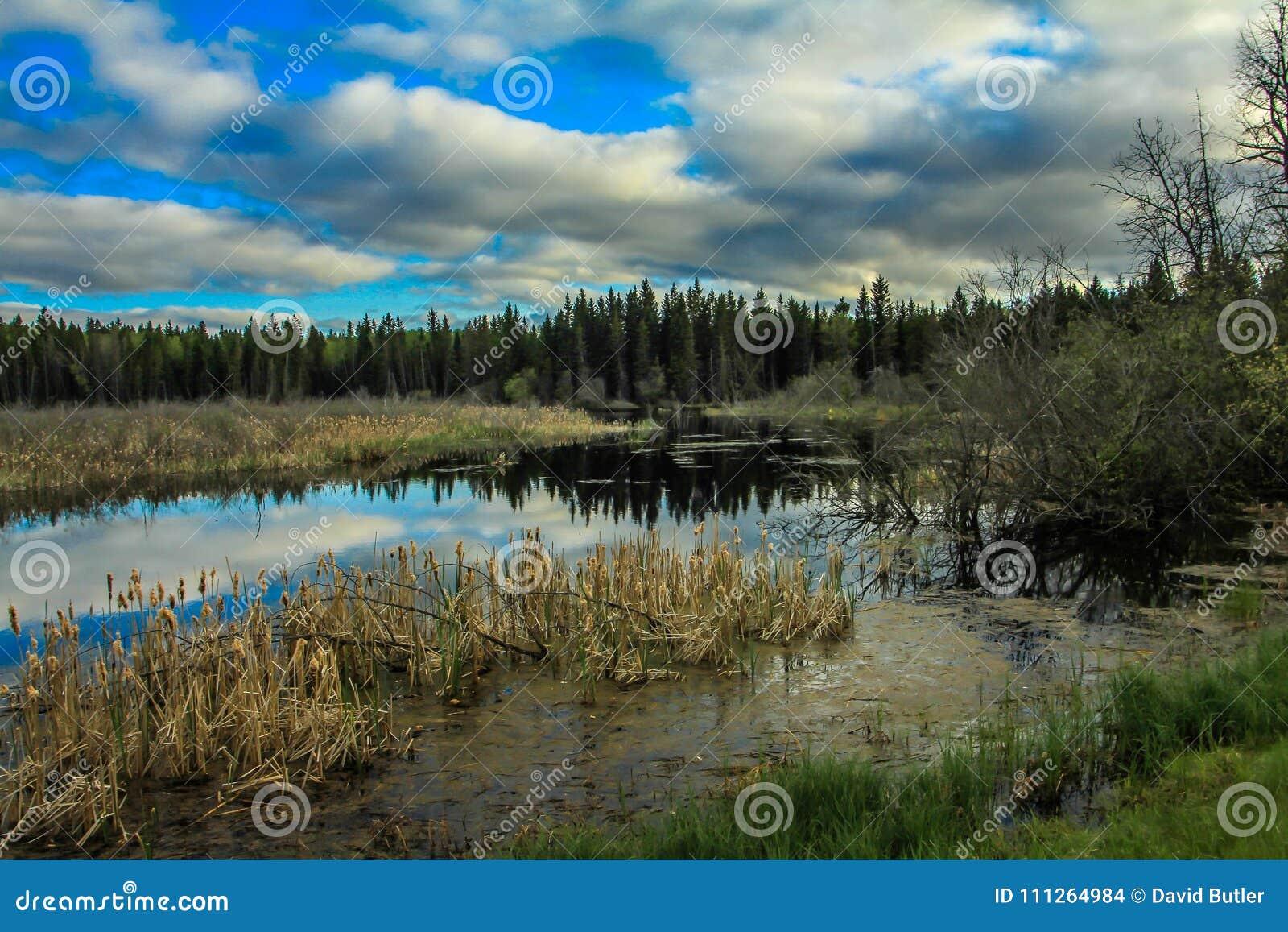 Du bord de la route, parc national de monte de montagne, Manitoba, Canada
