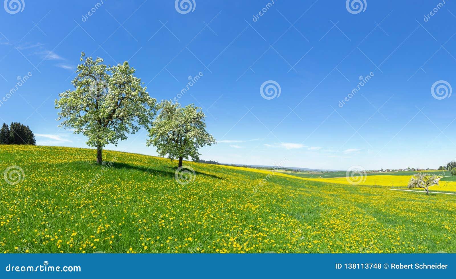 Duas árvores de fruto de florescência em um prado montanhoso da flor