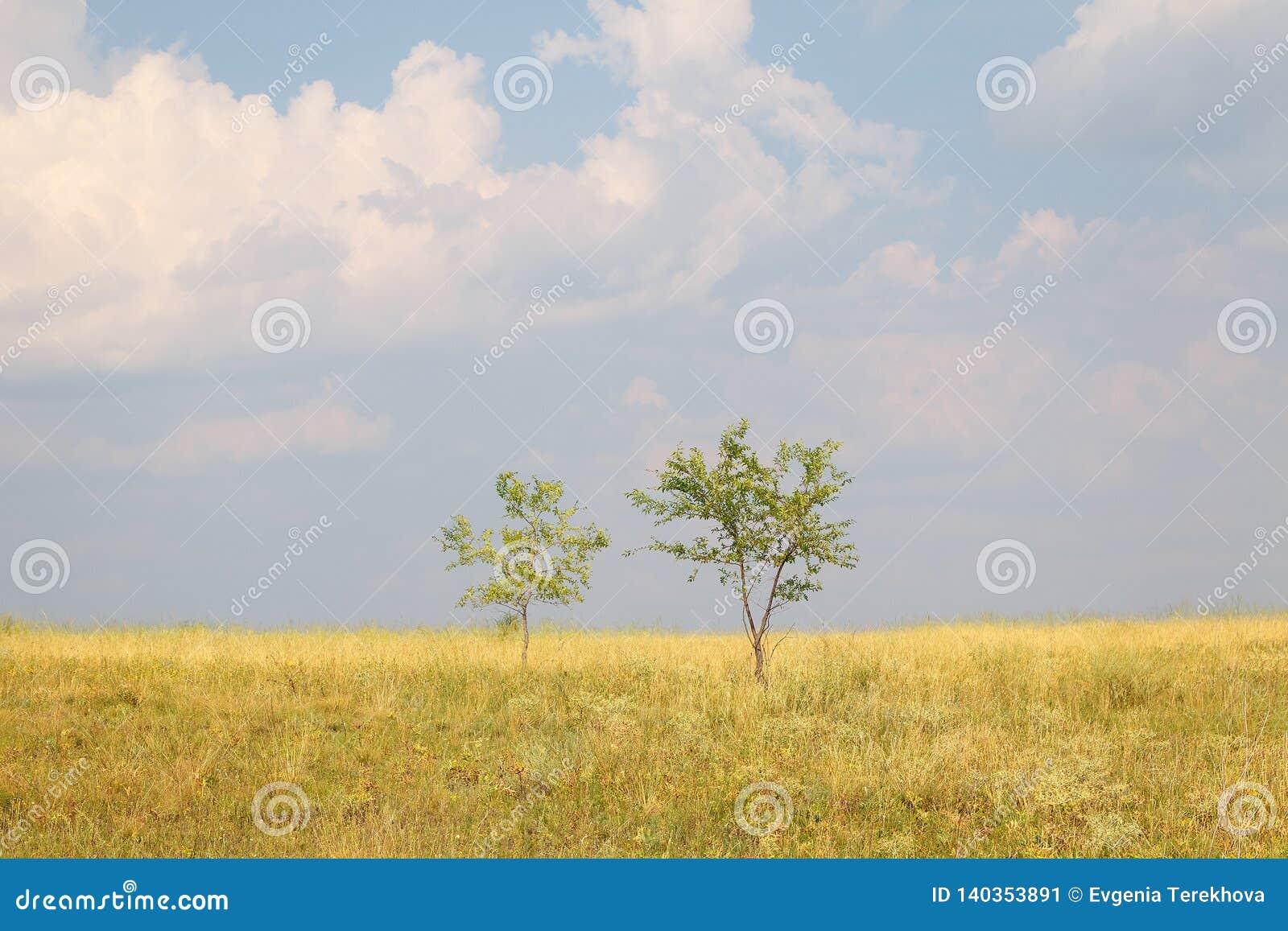 Duas árvores em um grande campo contra um céu azul e nuvens