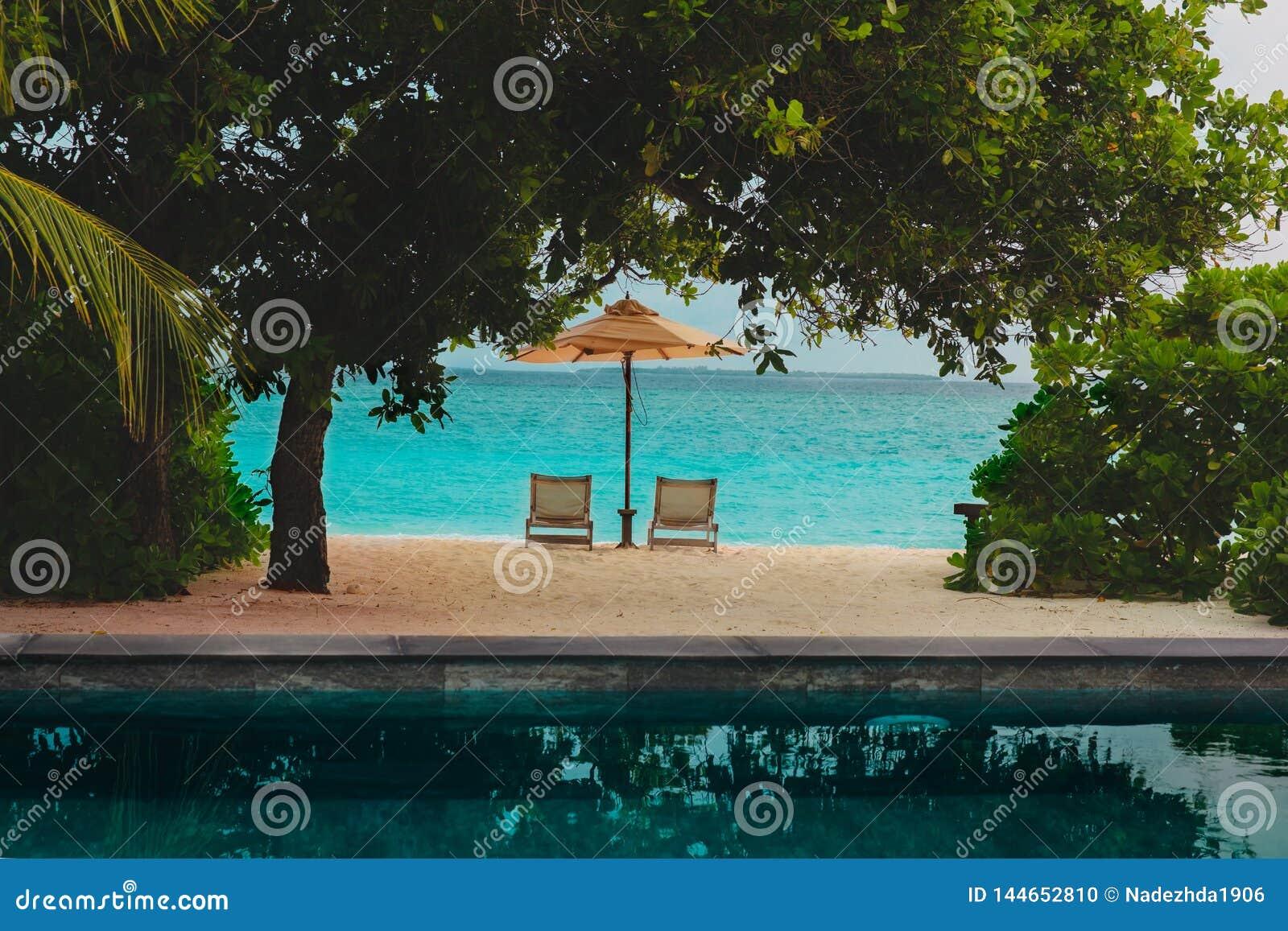 Duas cadeiras de praia no recurso tropical, conceito das férias