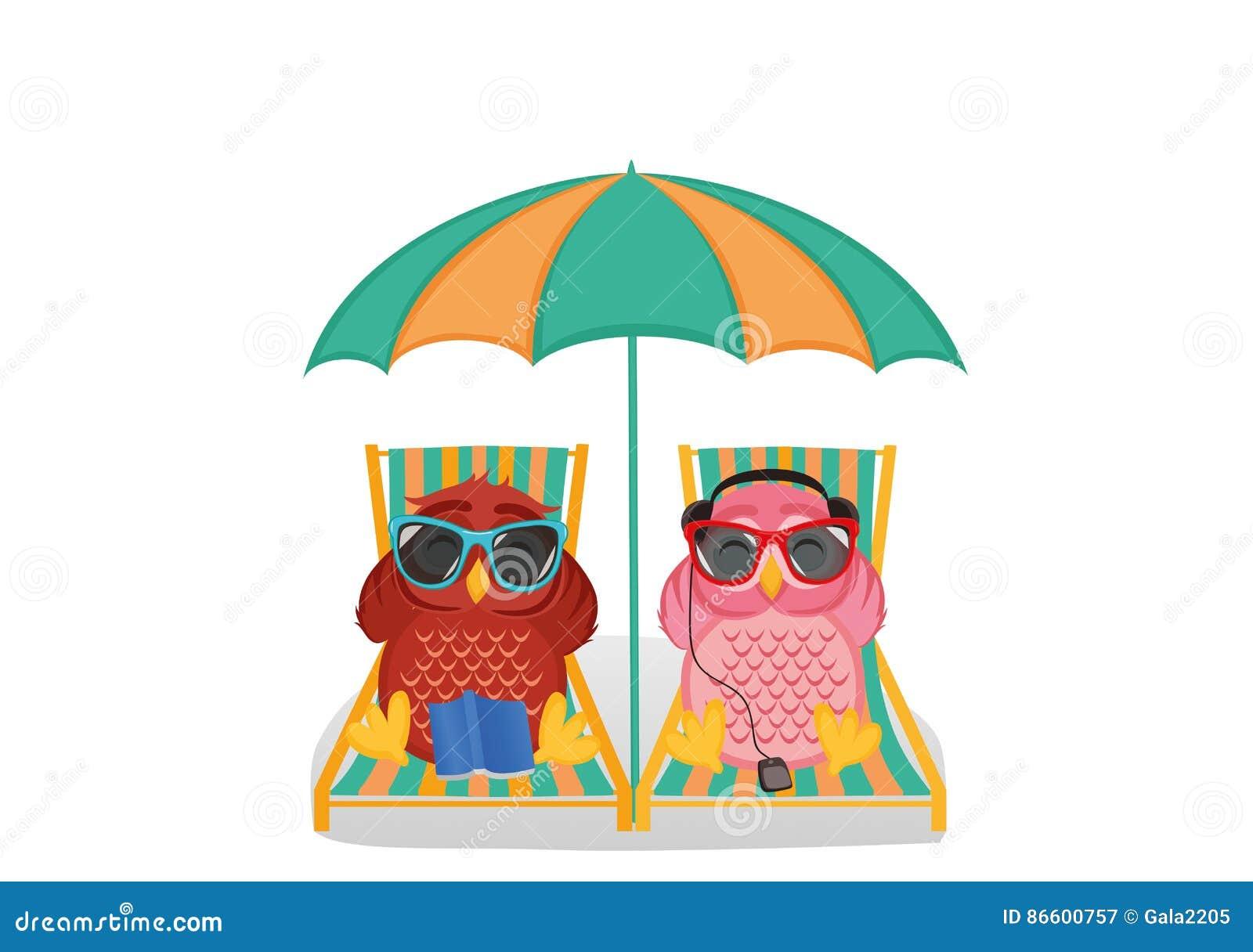 Duas Corujas Bonitos Com Os Oculos De Sol Nas Ferias Que Encontram