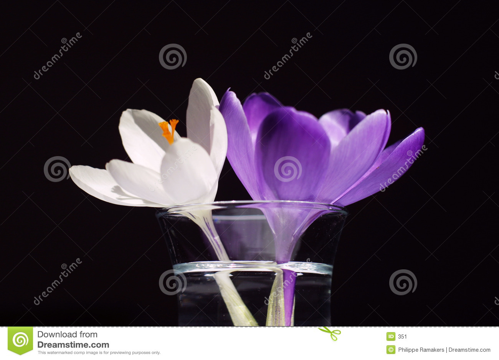 Duas flores