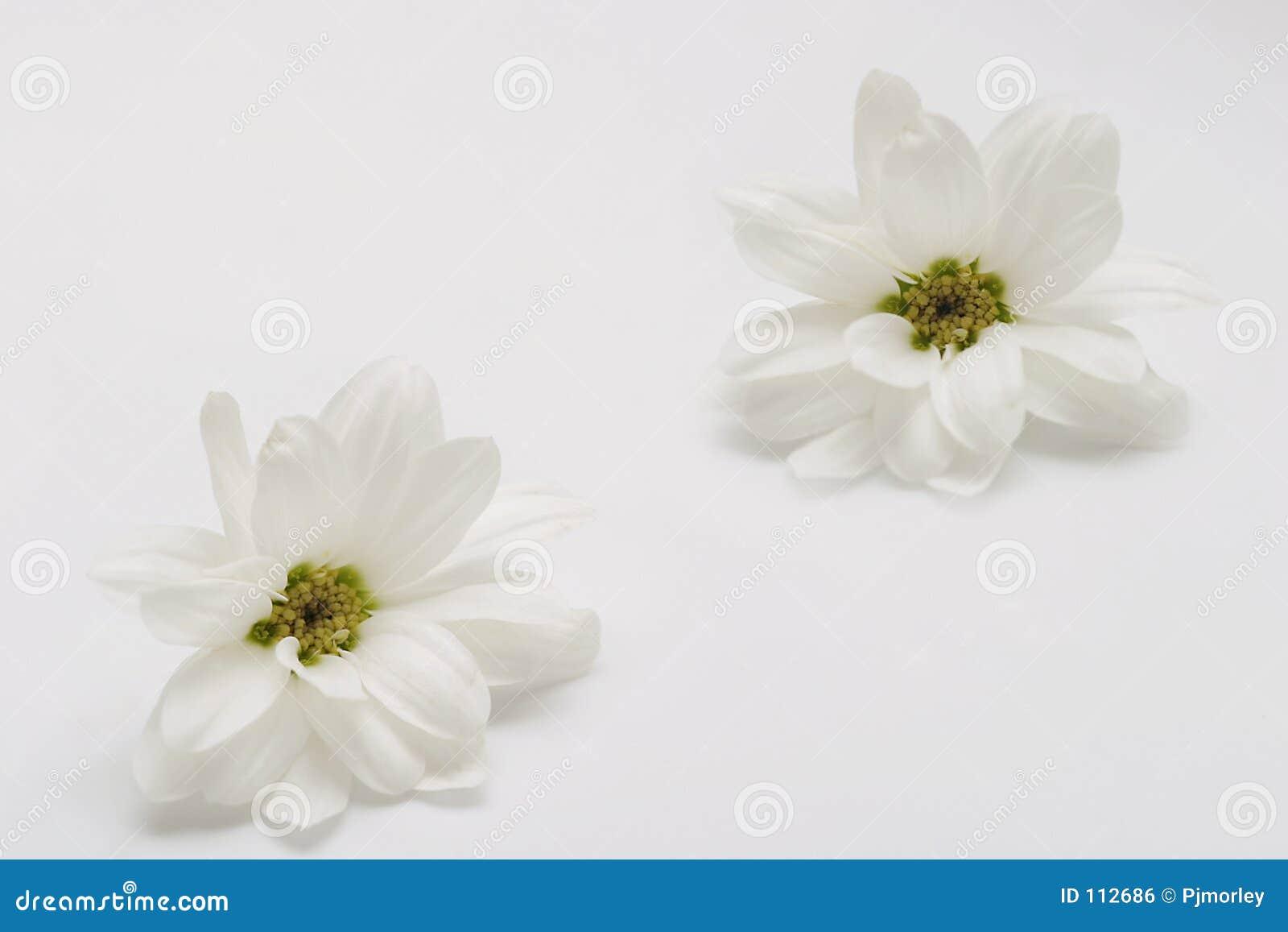 Duas flores brancas