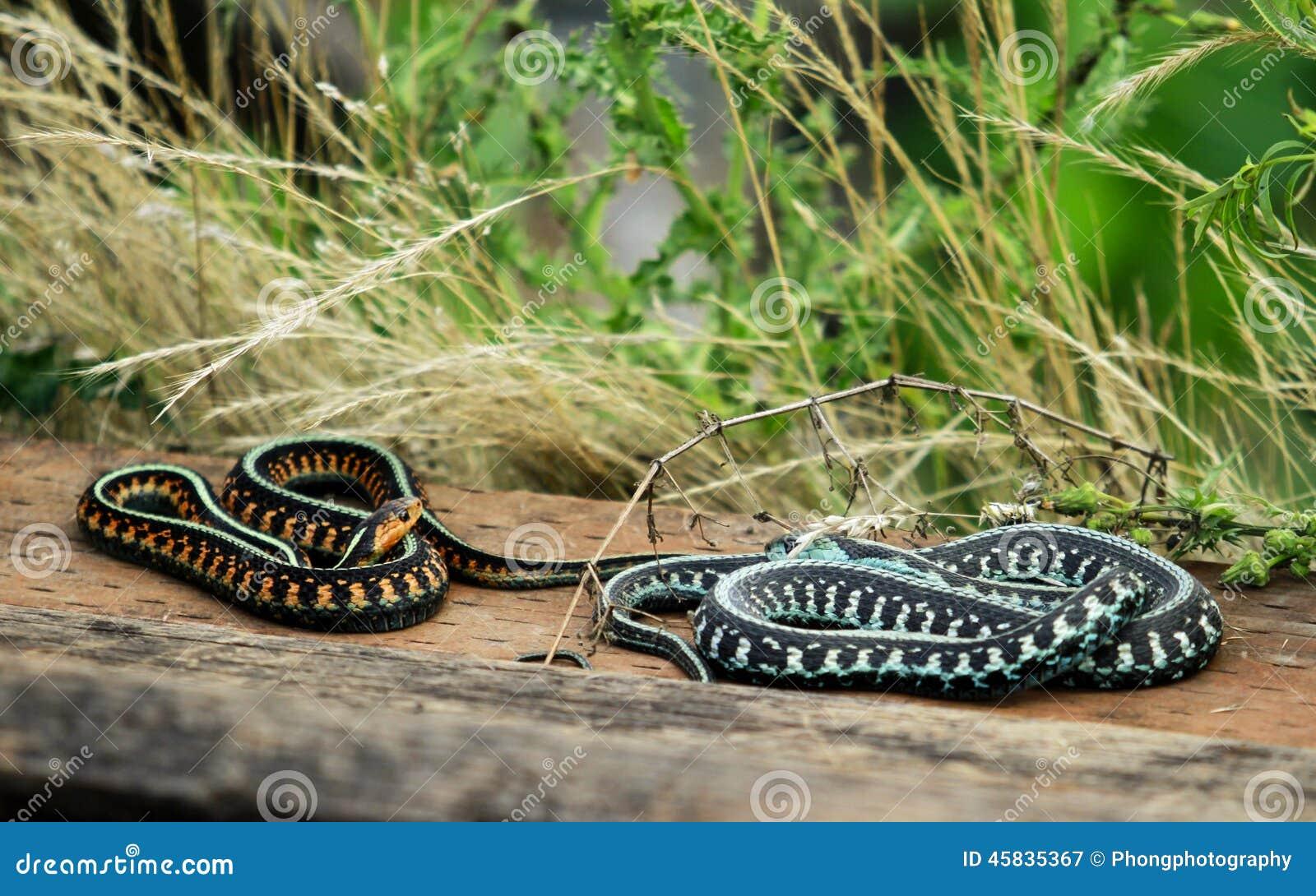 Duas serpentes coloridas