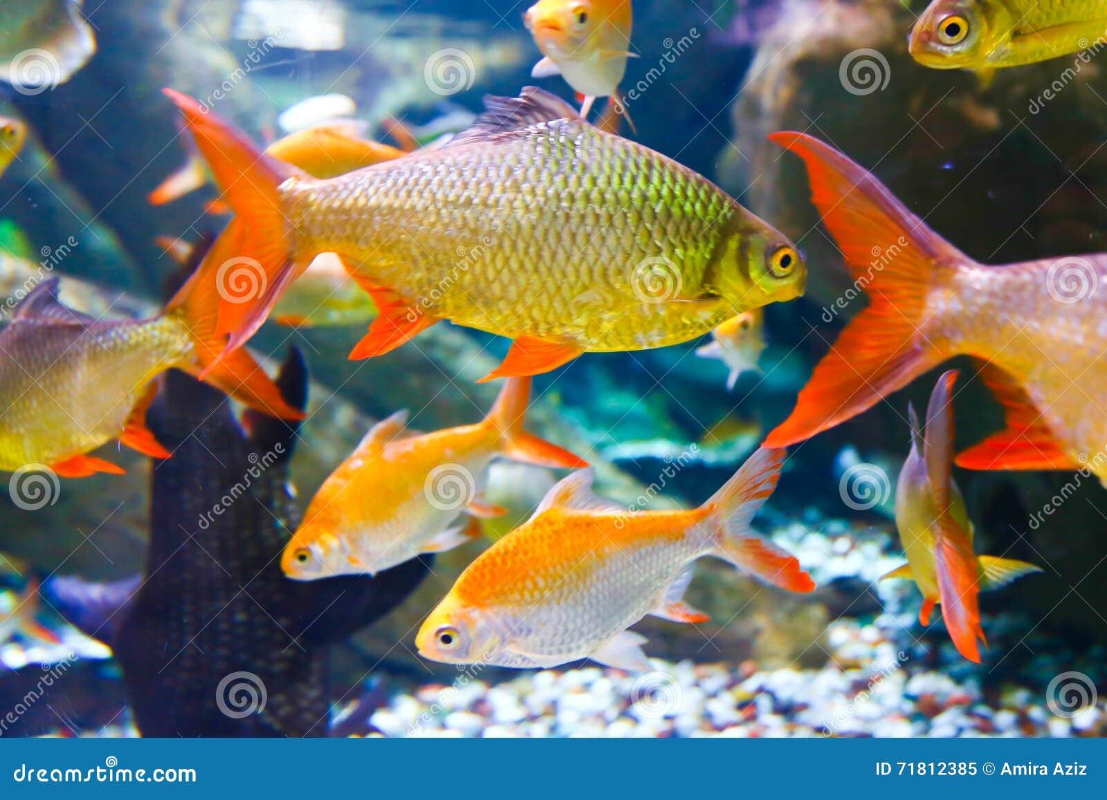 Freshwater aquarium fish in dubai - Dubai Aquarium