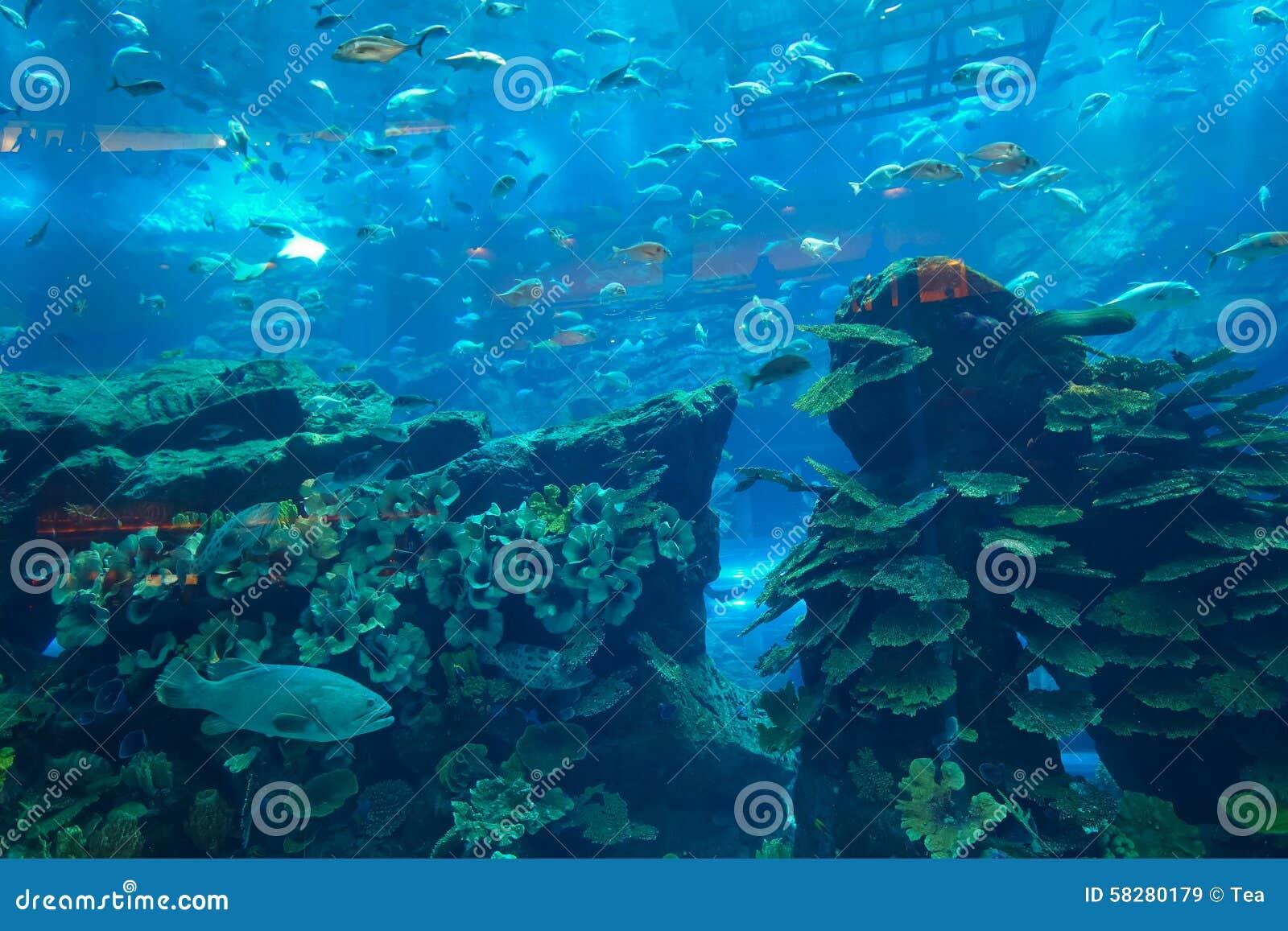 The Dubai Aquarium & Underwater Zoo In Dubai Mal Editorial Stock Image ...
