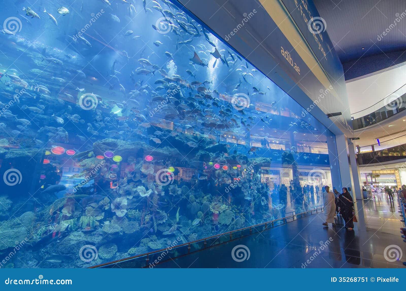 Dubai To Sharjah Travel Time