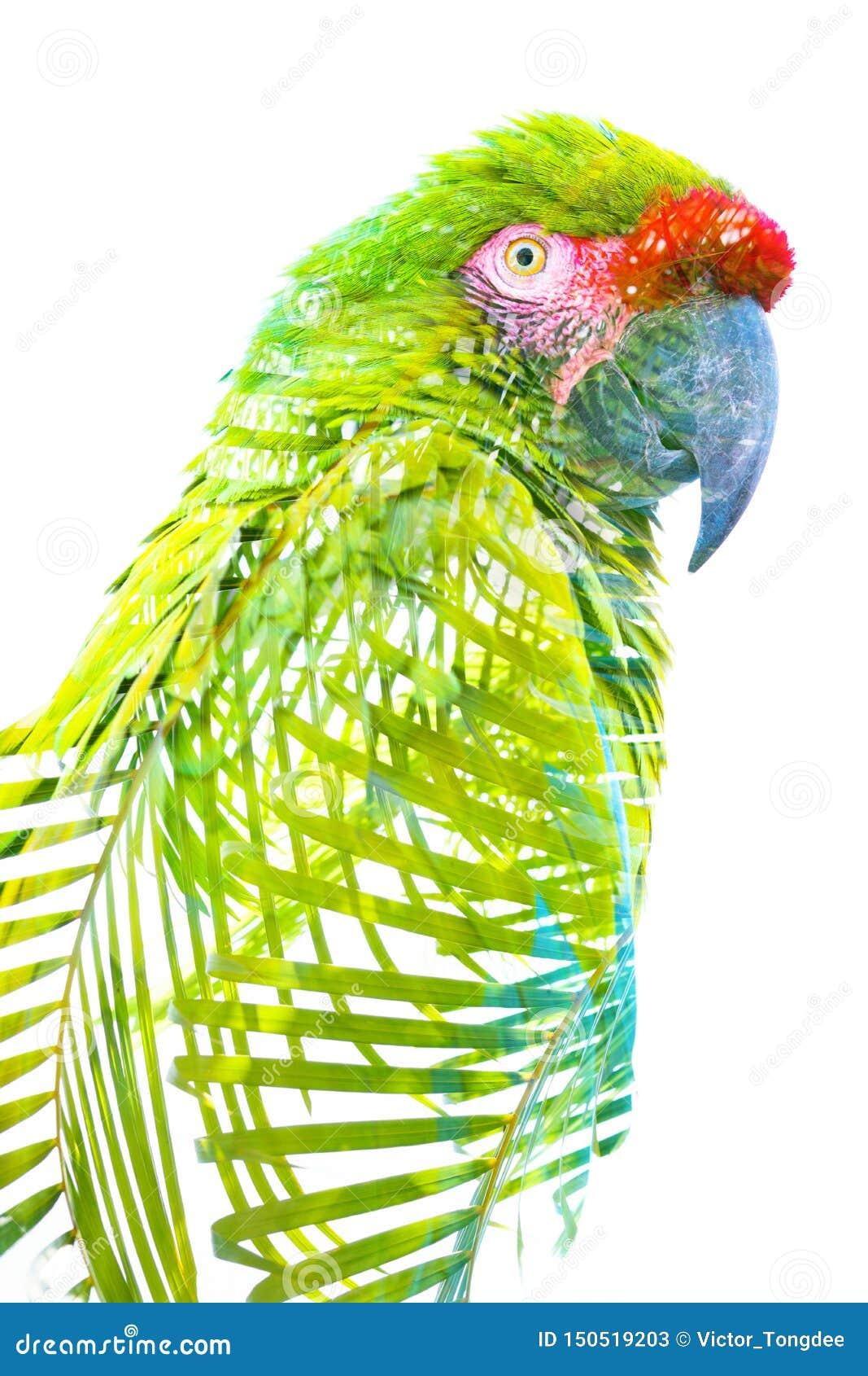 Dubbele blootstelling Foto van een tropische papegaai die met heldergroene bladeren wordt gecombineerd