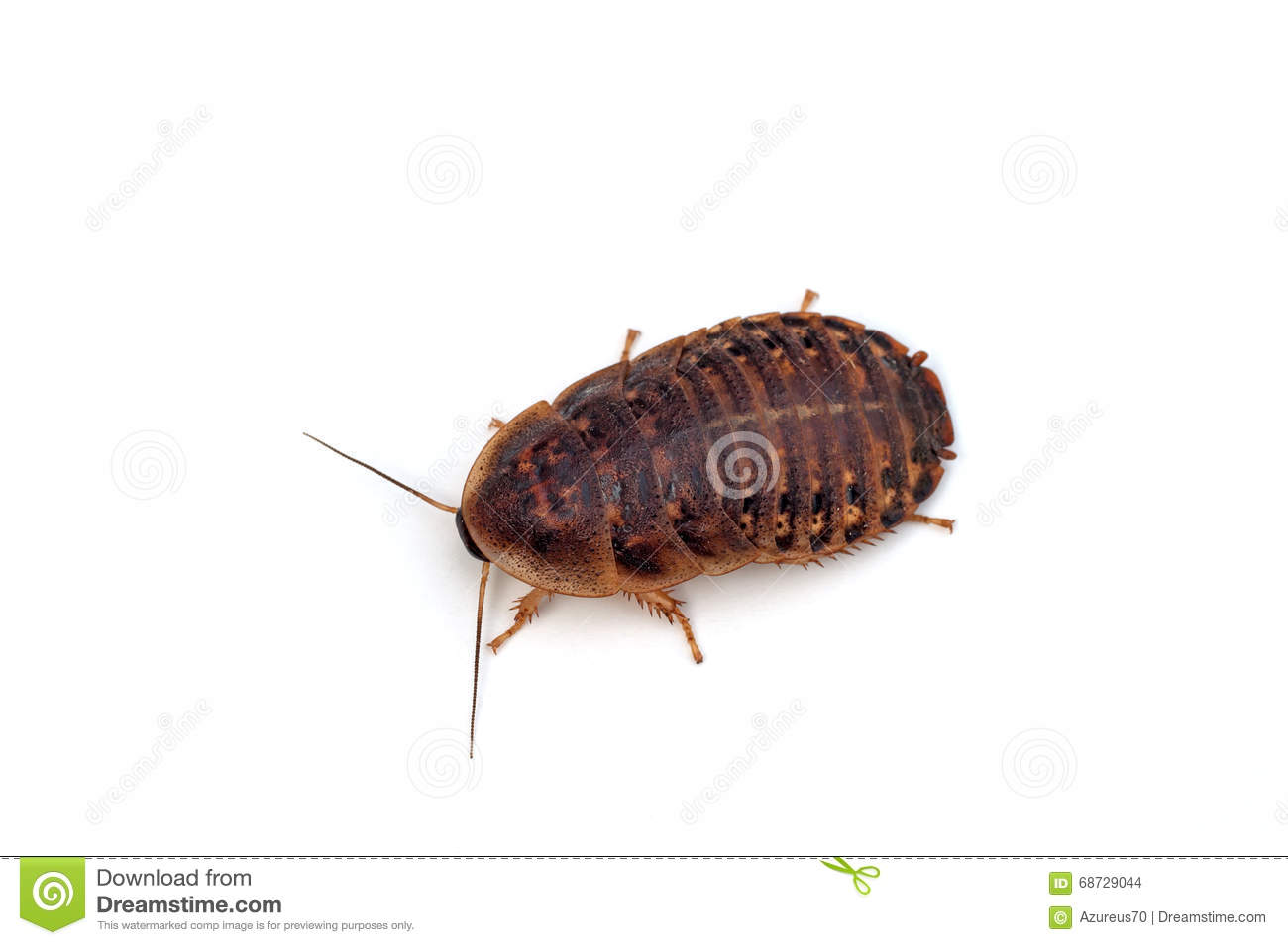 445 roach stock footage & videos are available royalty-free.