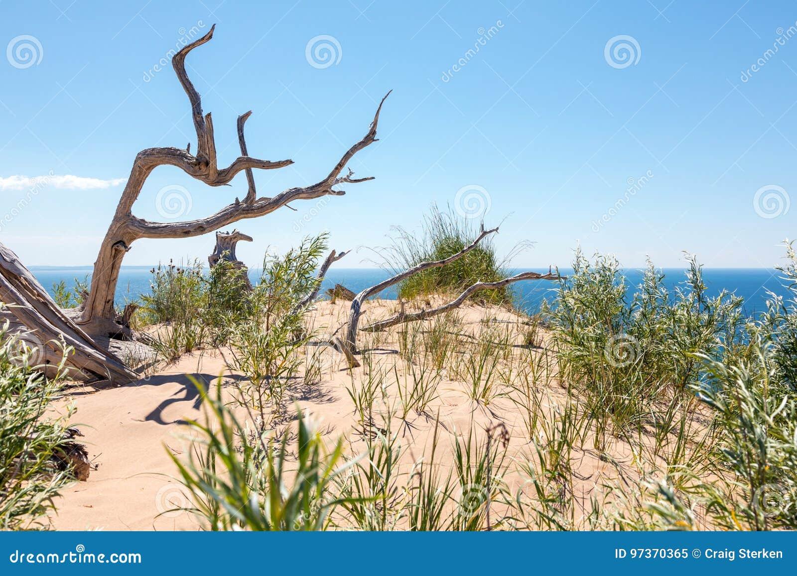 Ducha drzewo dosypianie niedźwiedzia diun obywatel Lakeshore