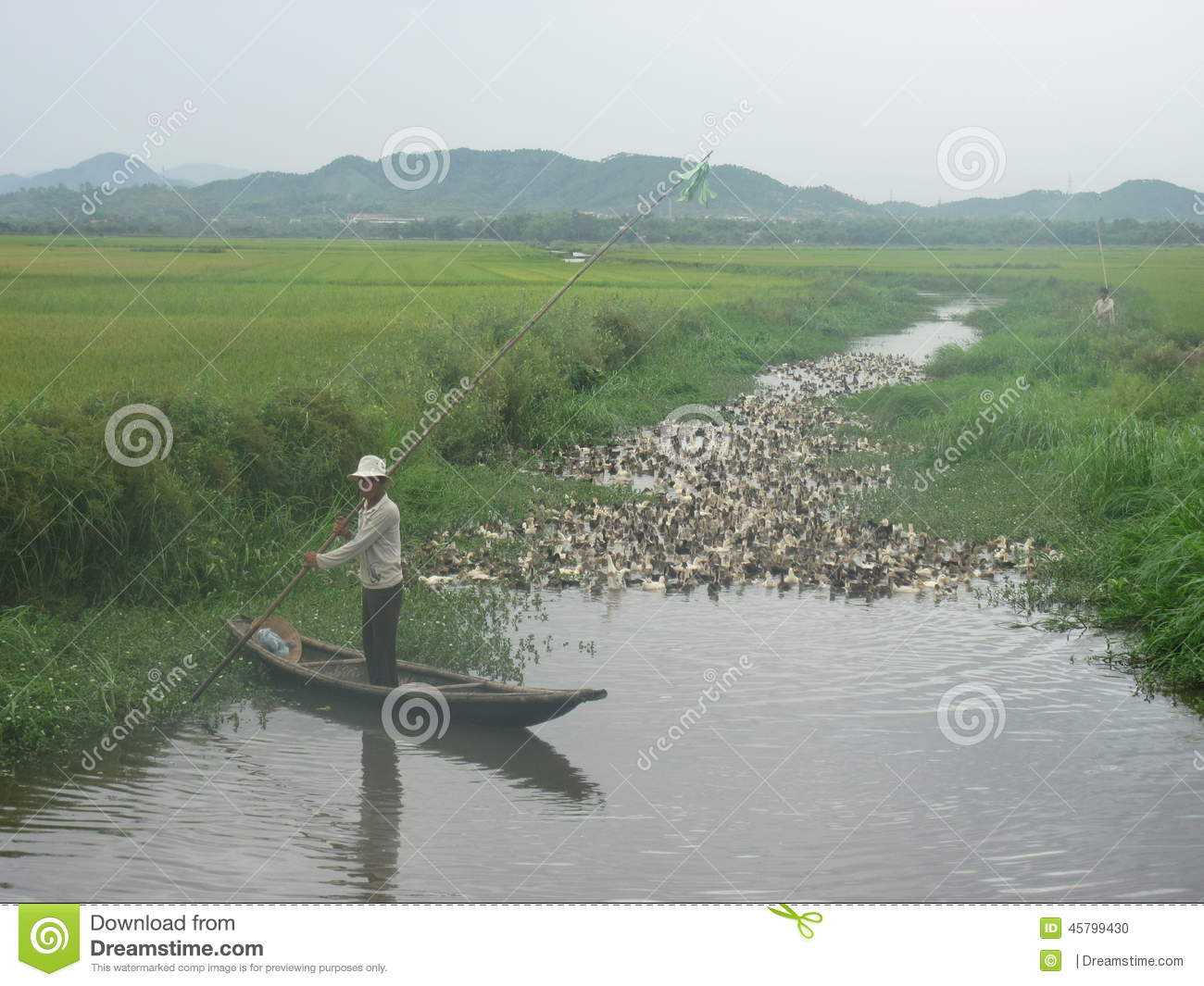 duck farming Fertilizing the fields with ducks, japan compiled by: christoph aicher  effect of integrated rice-duck farming on rice yield, farm productivity, and.